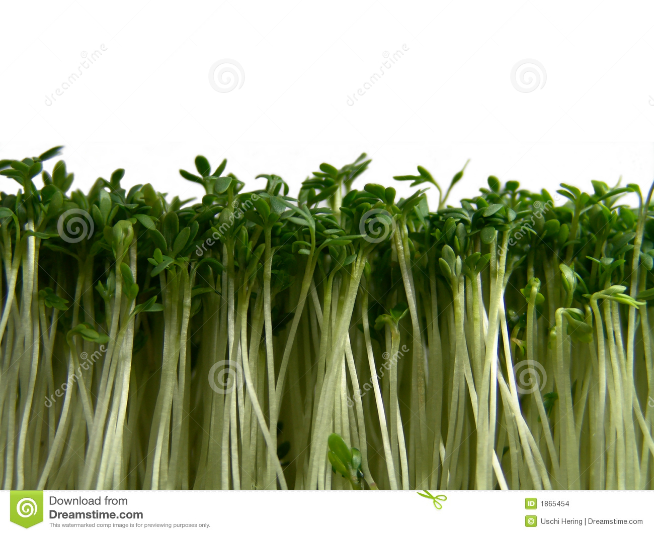 Cress forest