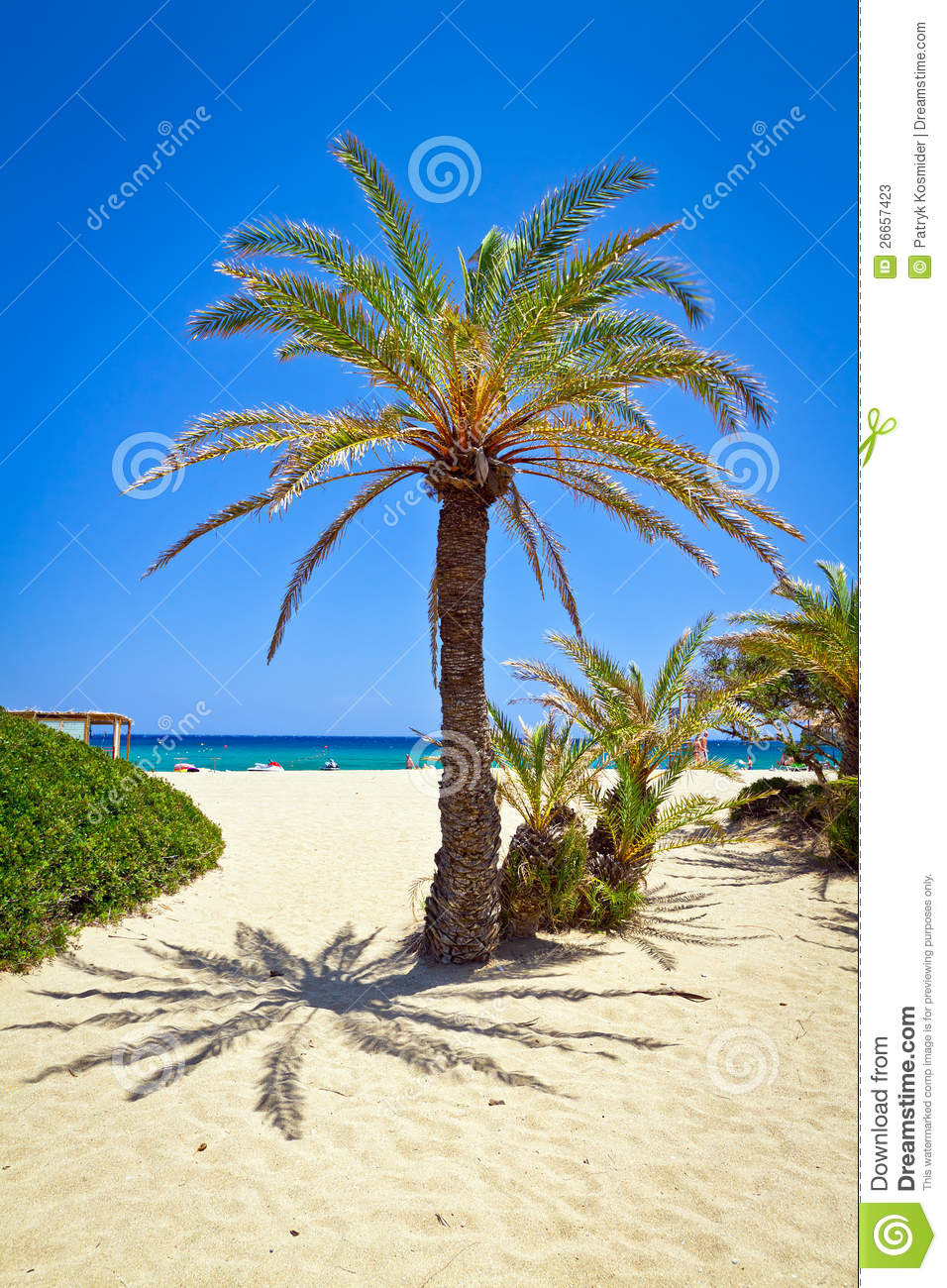 cretan date palm tree on idyllic vai beach stock photos free beach clipart with hammock free beach clip art pictures