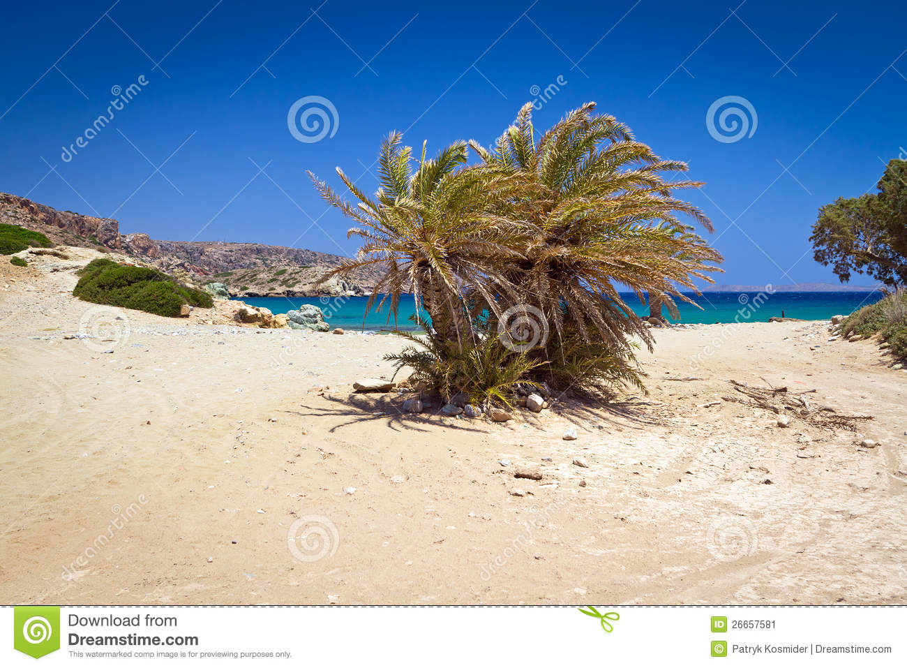 Blue Or Green Cretan Date Palm Trees On Vai Beach Greece Royalty Free