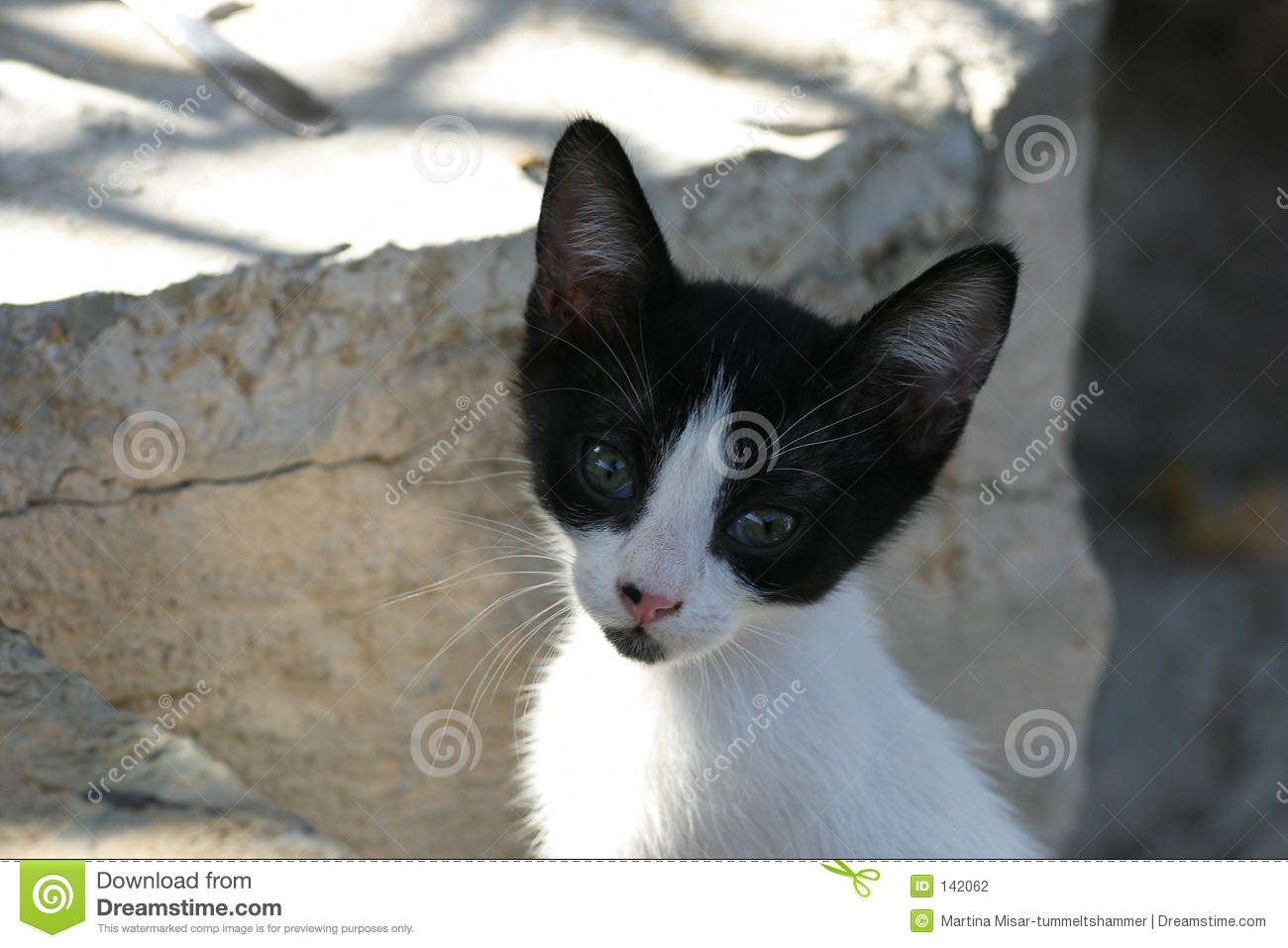 Crete / Baby cat begging for food