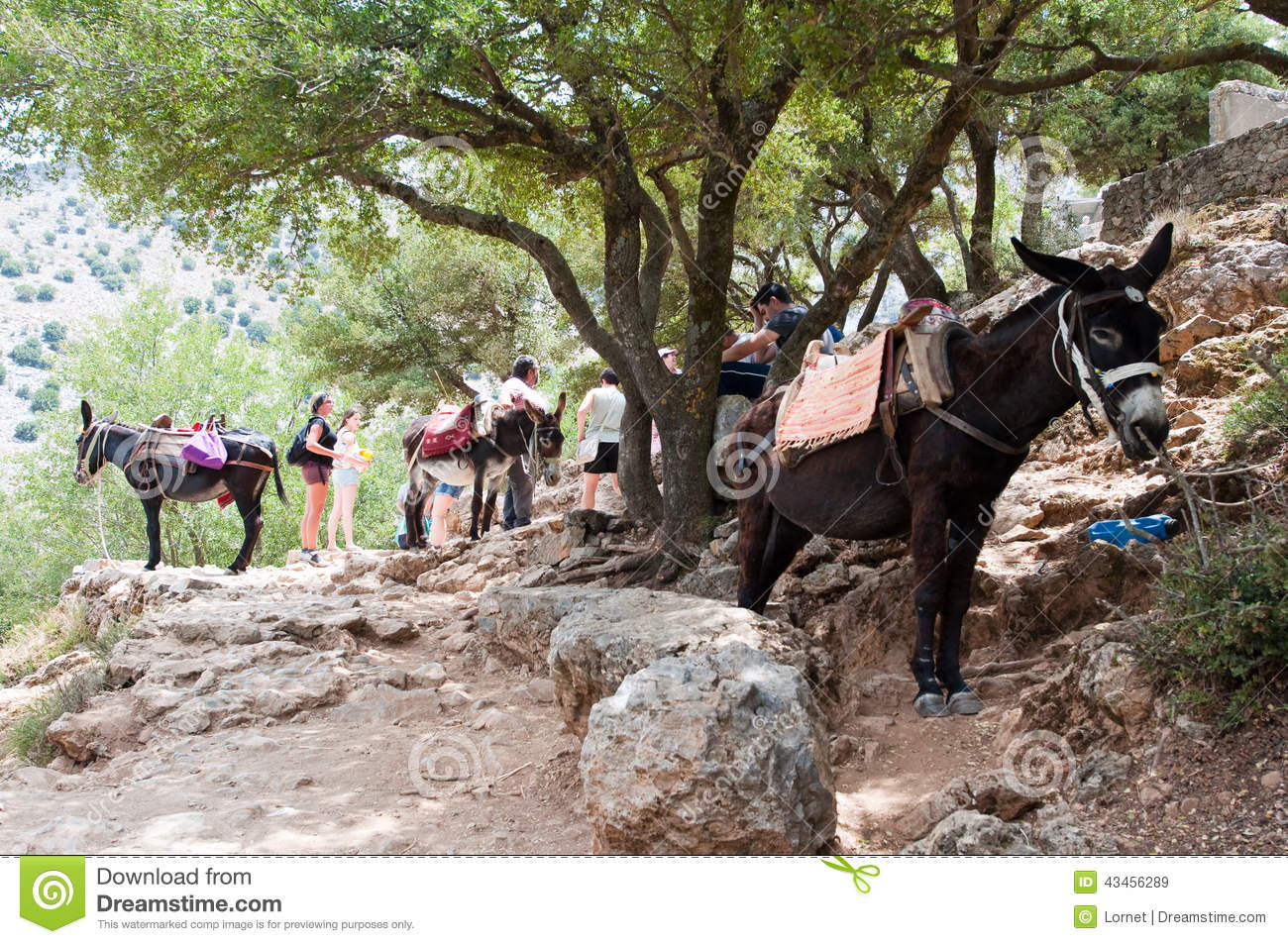 CRETE-JULY 21: The Cave of Zeus and donkey on July 21,2014 on the Crete island in Greece.
