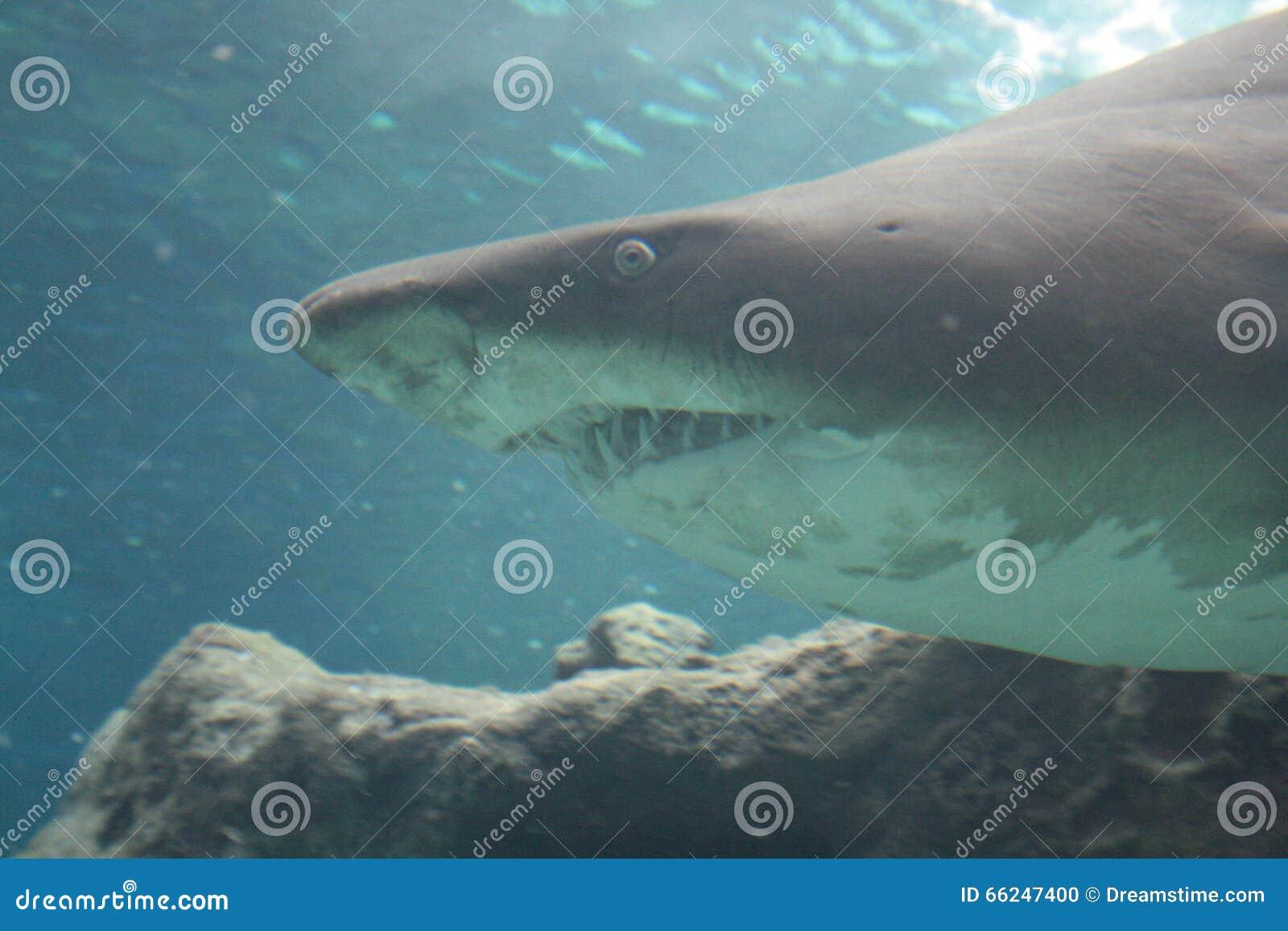 Crete. Oceanarium. Shark.