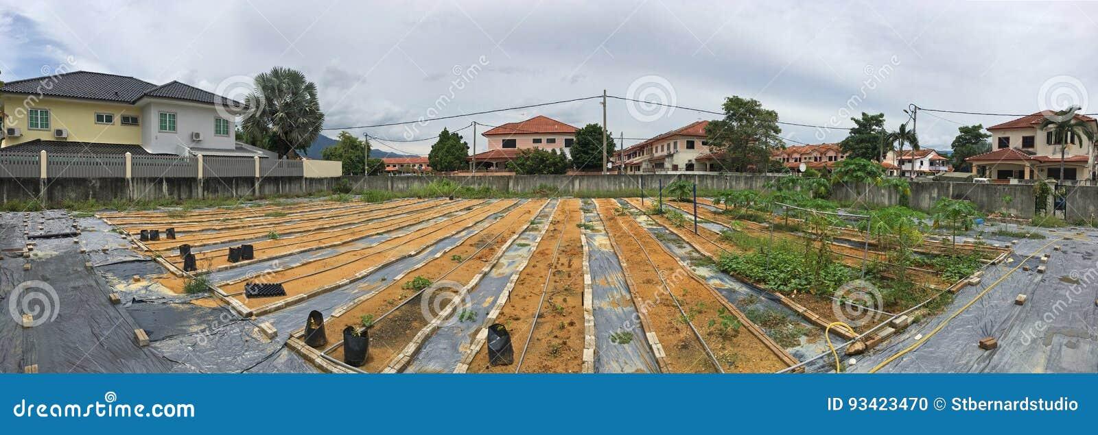 Crezca o mantenga nuestro propio jardín orgánico con las hierbas, las verduras y las frutas en compuesto de la casa