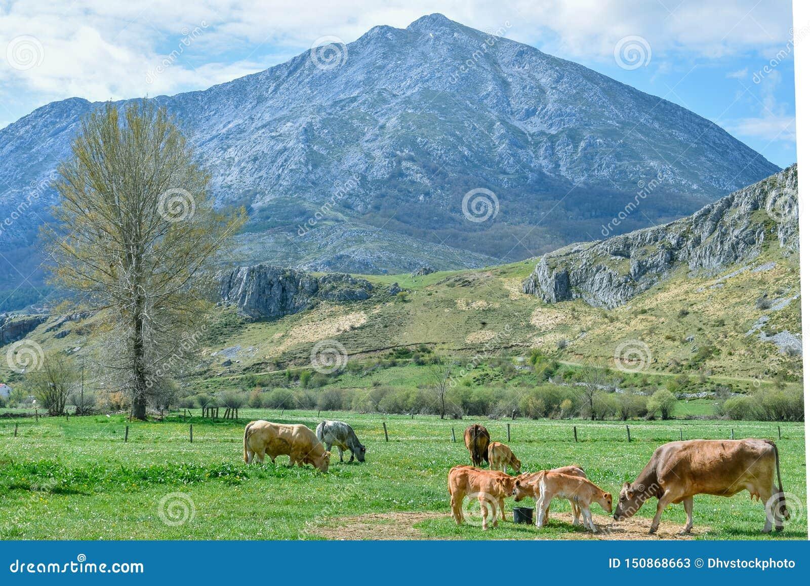 Criacão de gado do ar livre na paisagem da montanha