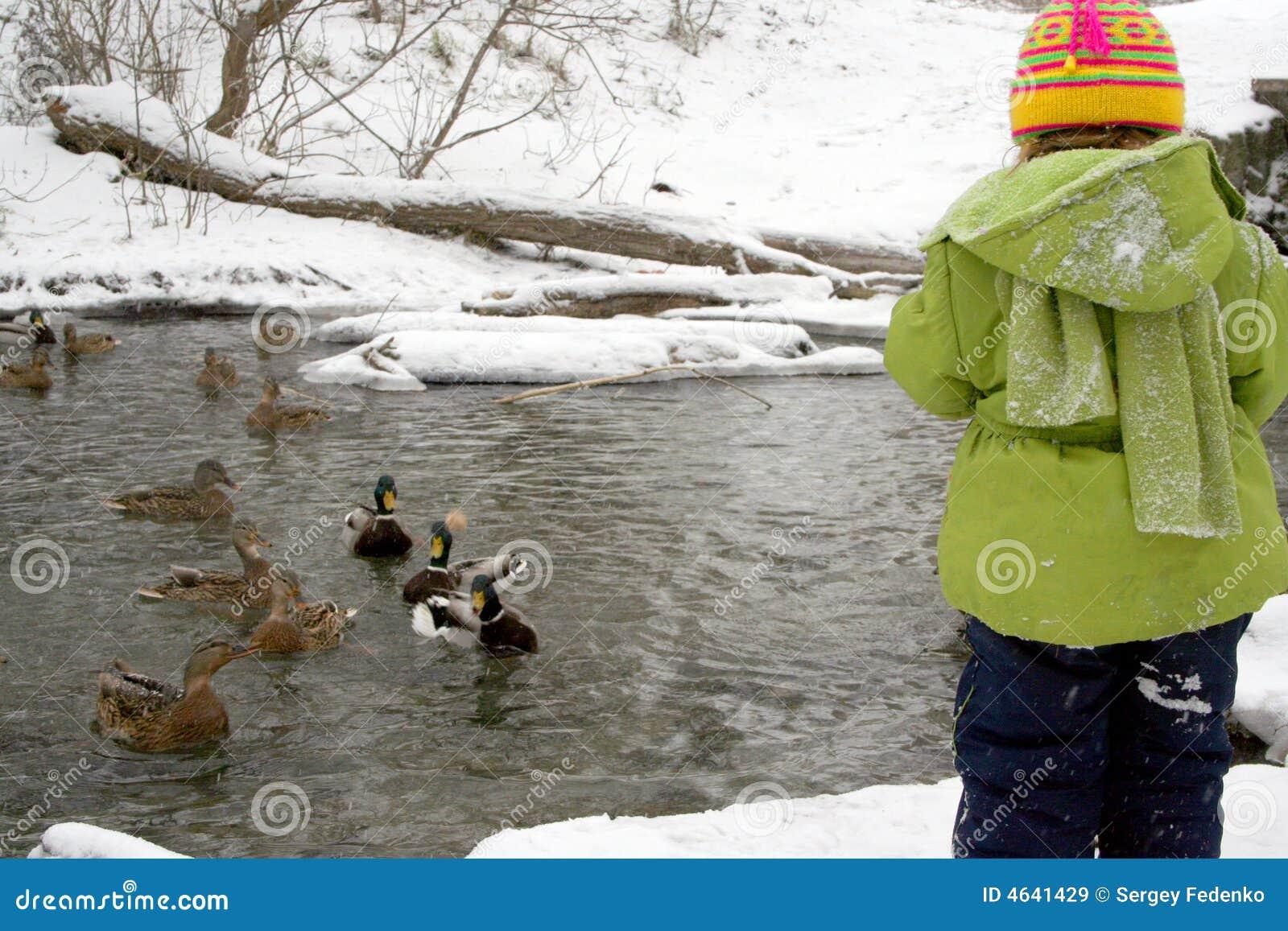 A criança alimenta patos