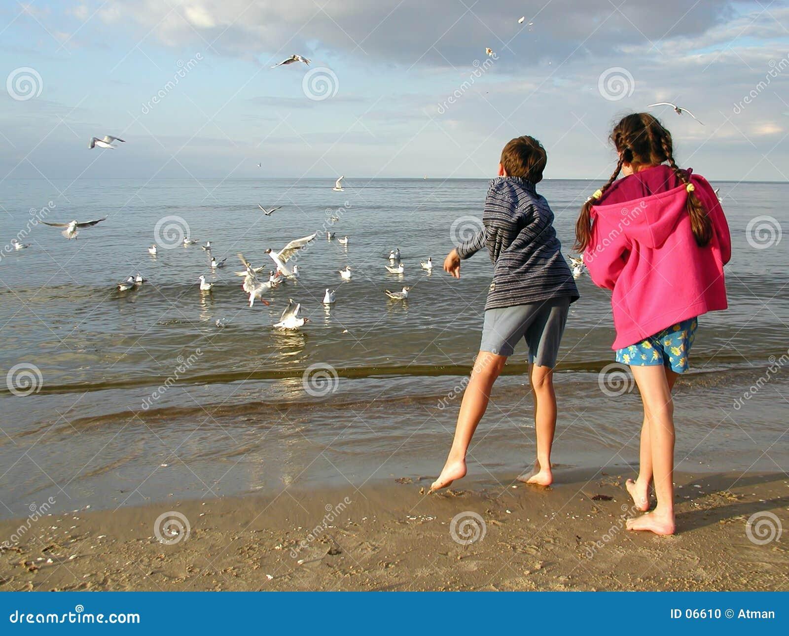 Crianças que alimentam gaivota