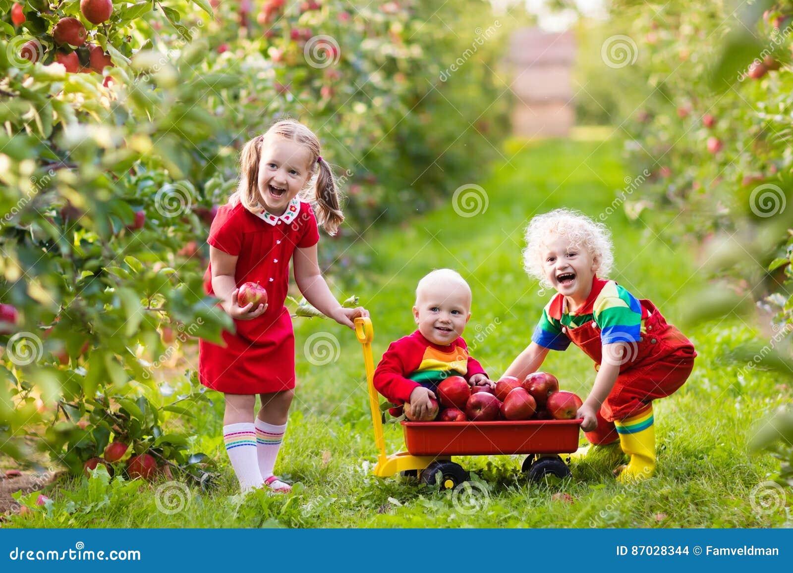 Crianças que escolhem maçãs no jardim do fruto