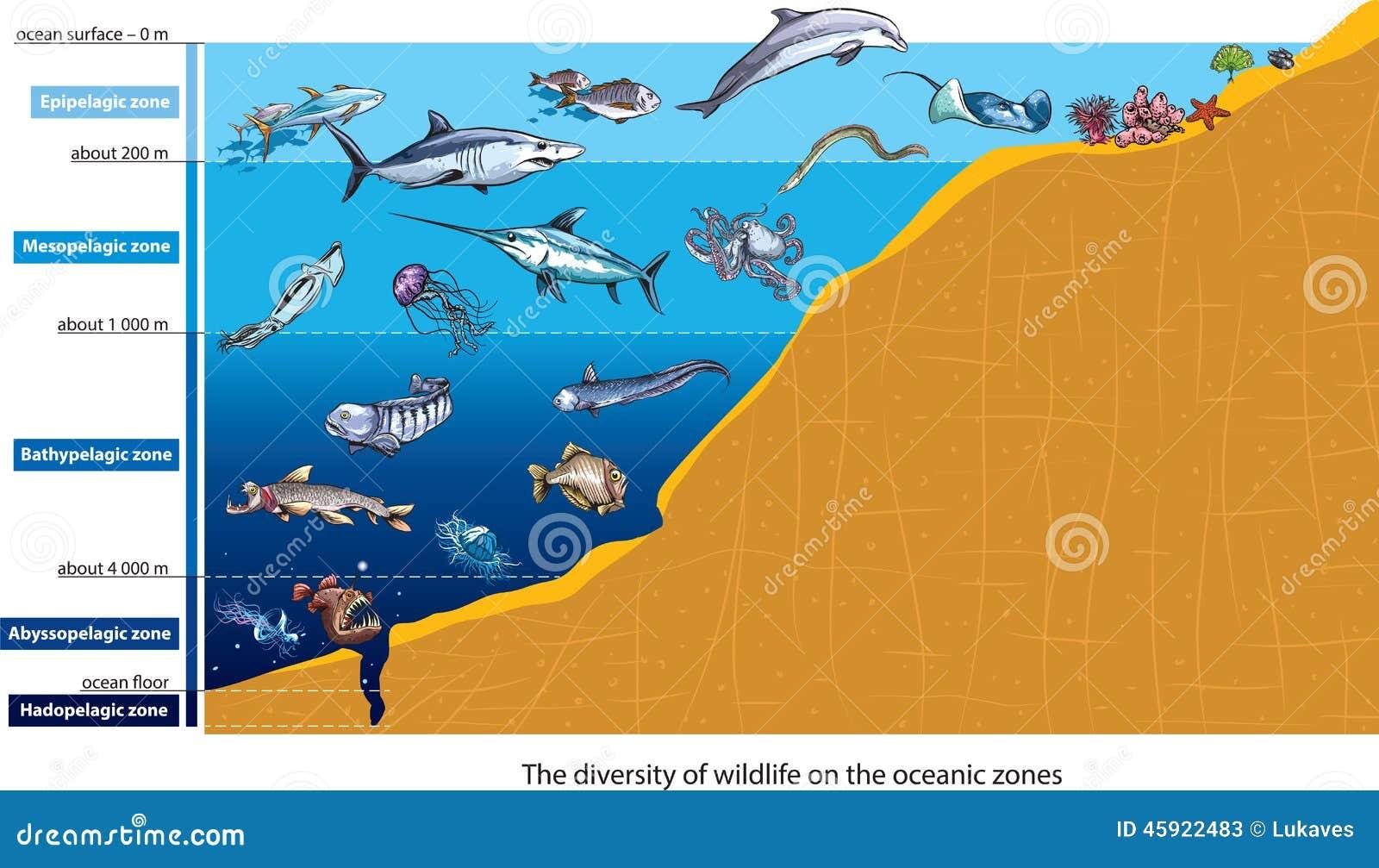 Criaturas do mar profundo