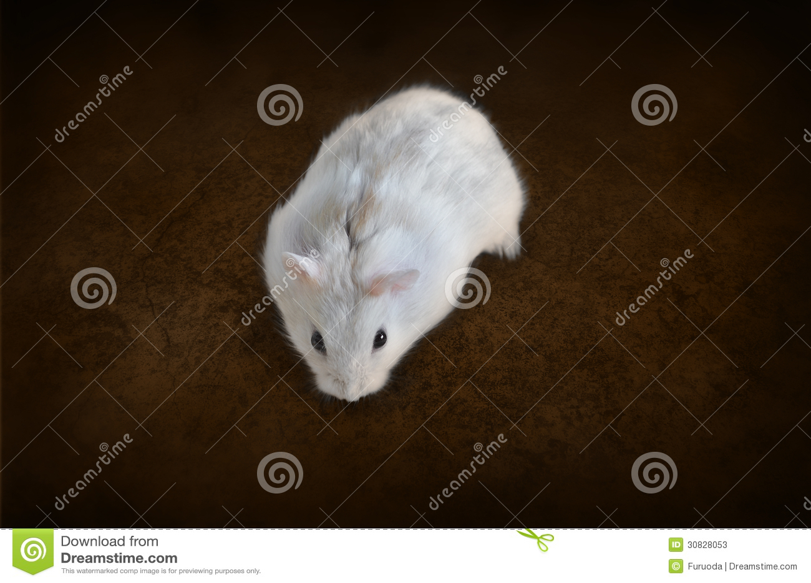 Criceto bianco