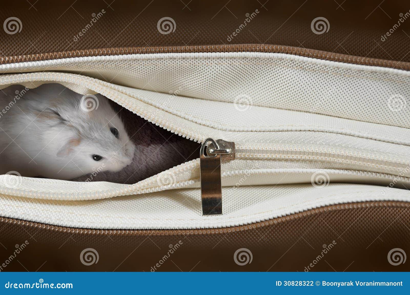 Criceto in una borsa