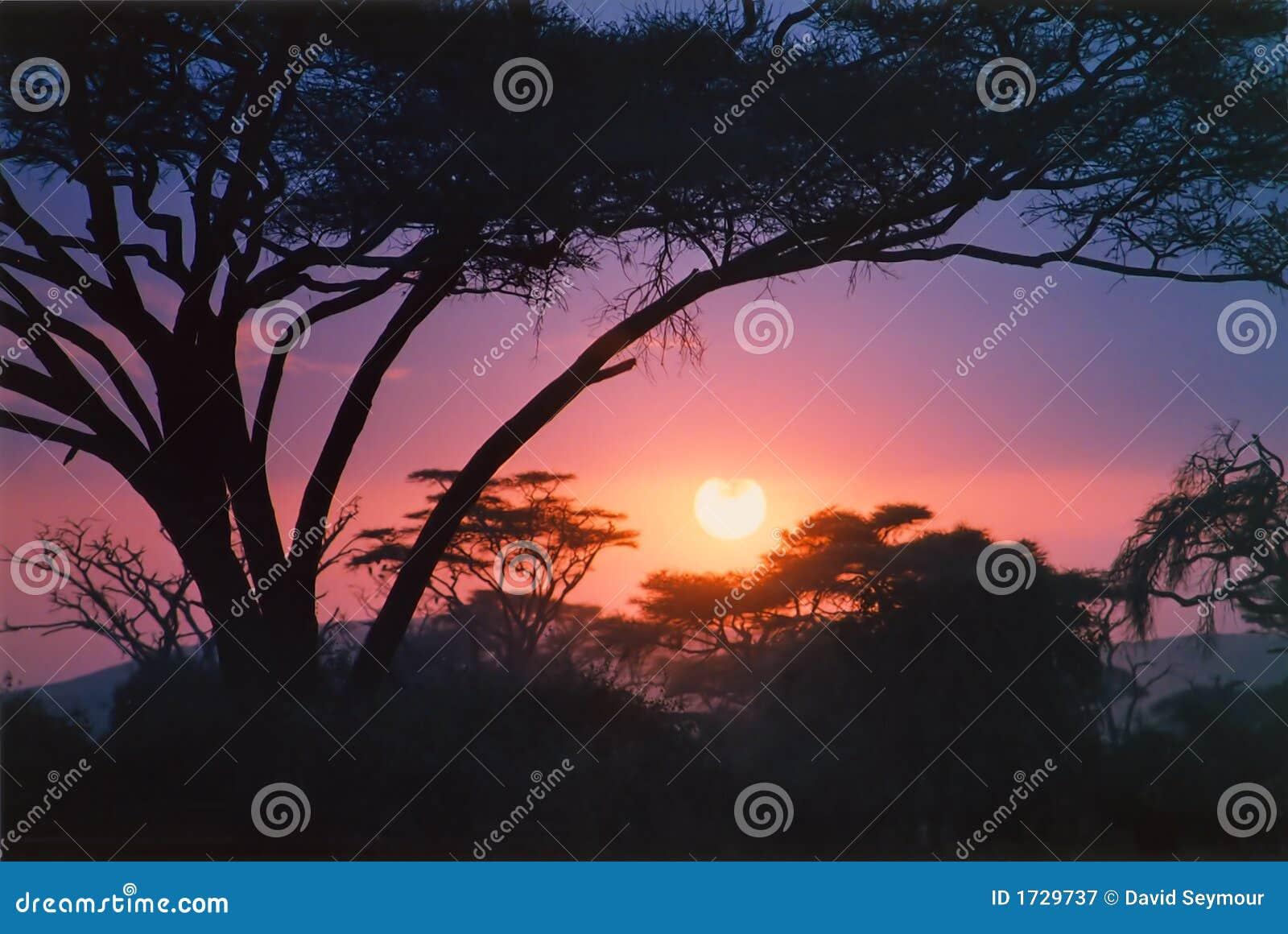Crimson African sunrise