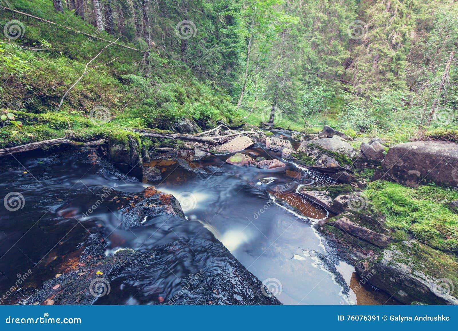 Crique dans la forêt