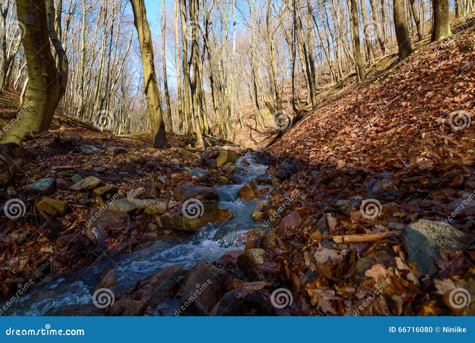 Crique de forêt en premier ressort