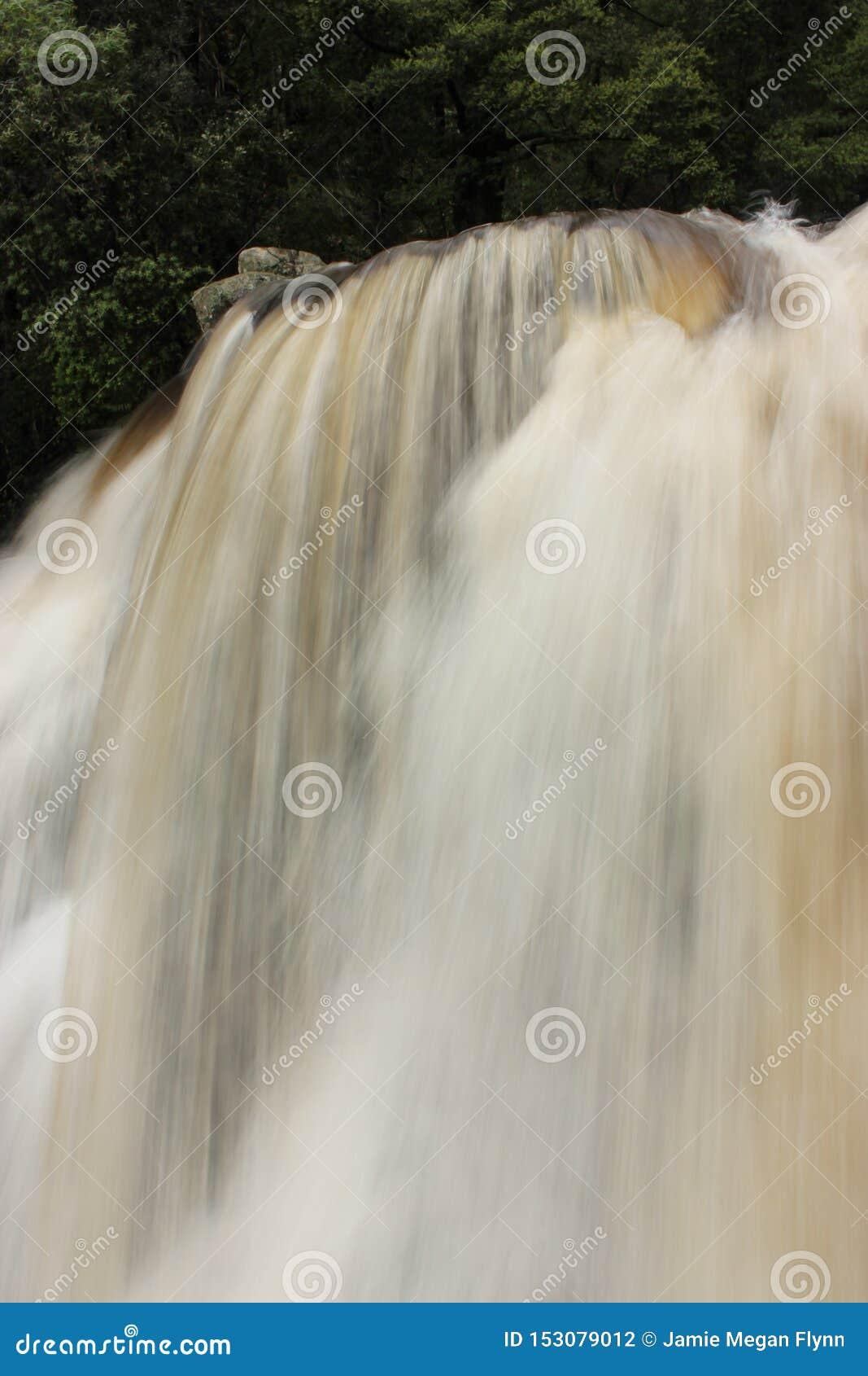 Crique soyeuse verticale Victoria Australia de snobs de nature de paysage de Forest Waterfall