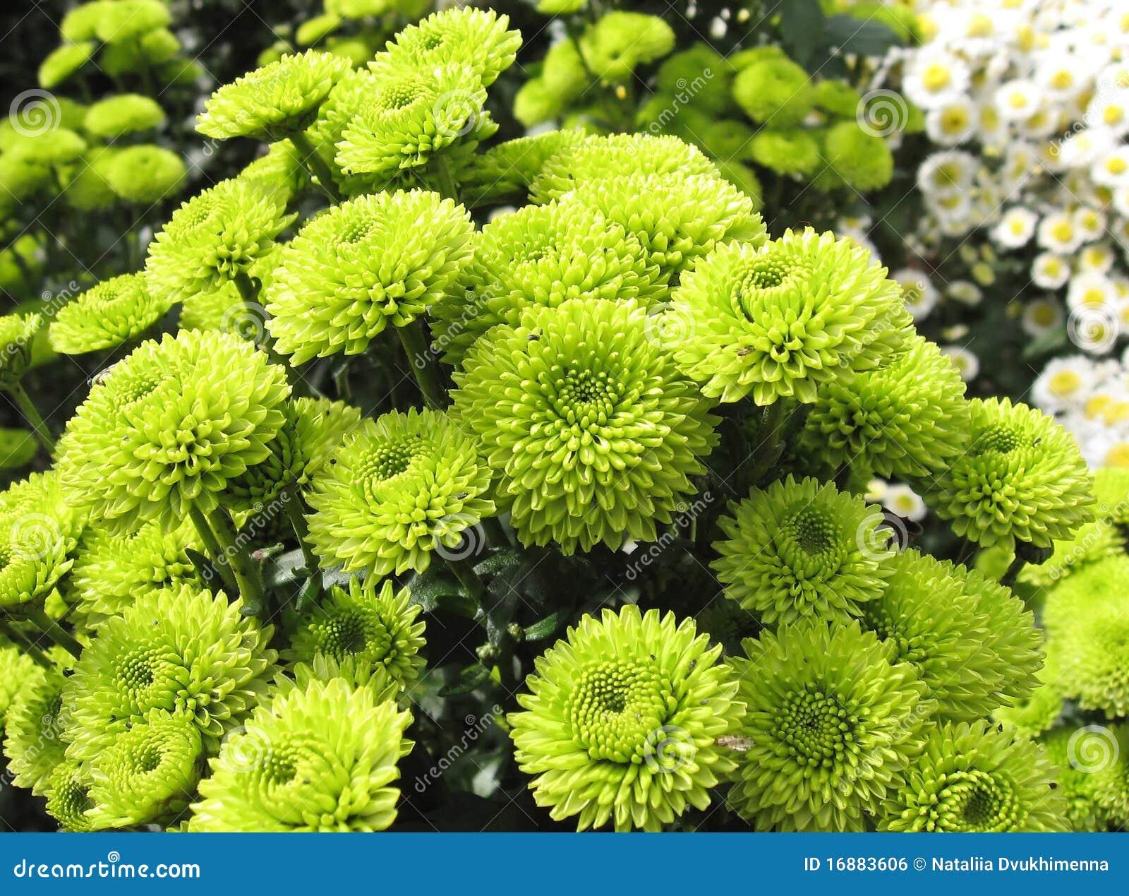 groene primer