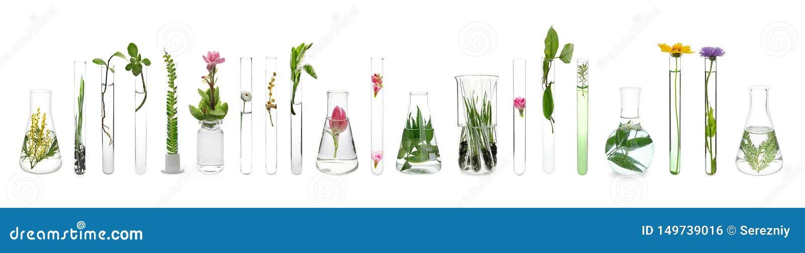 Cristaler?a de laboratorio con las plantas en el fondo blanco