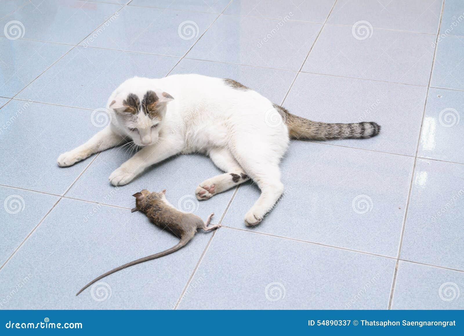 crochet de chat et souris de morsure rat image stock image du paresseux chaton 54890337. Black Bedroom Furniture Sets. Home Design Ideas