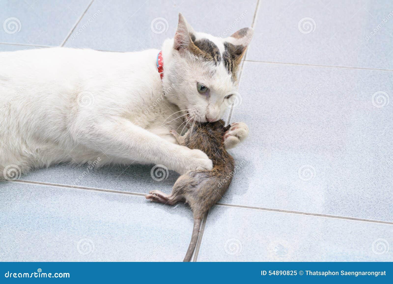 crochet de chat et souris de morsure rat image stock image 54890825. Black Bedroom Furniture Sets. Home Design Ideas