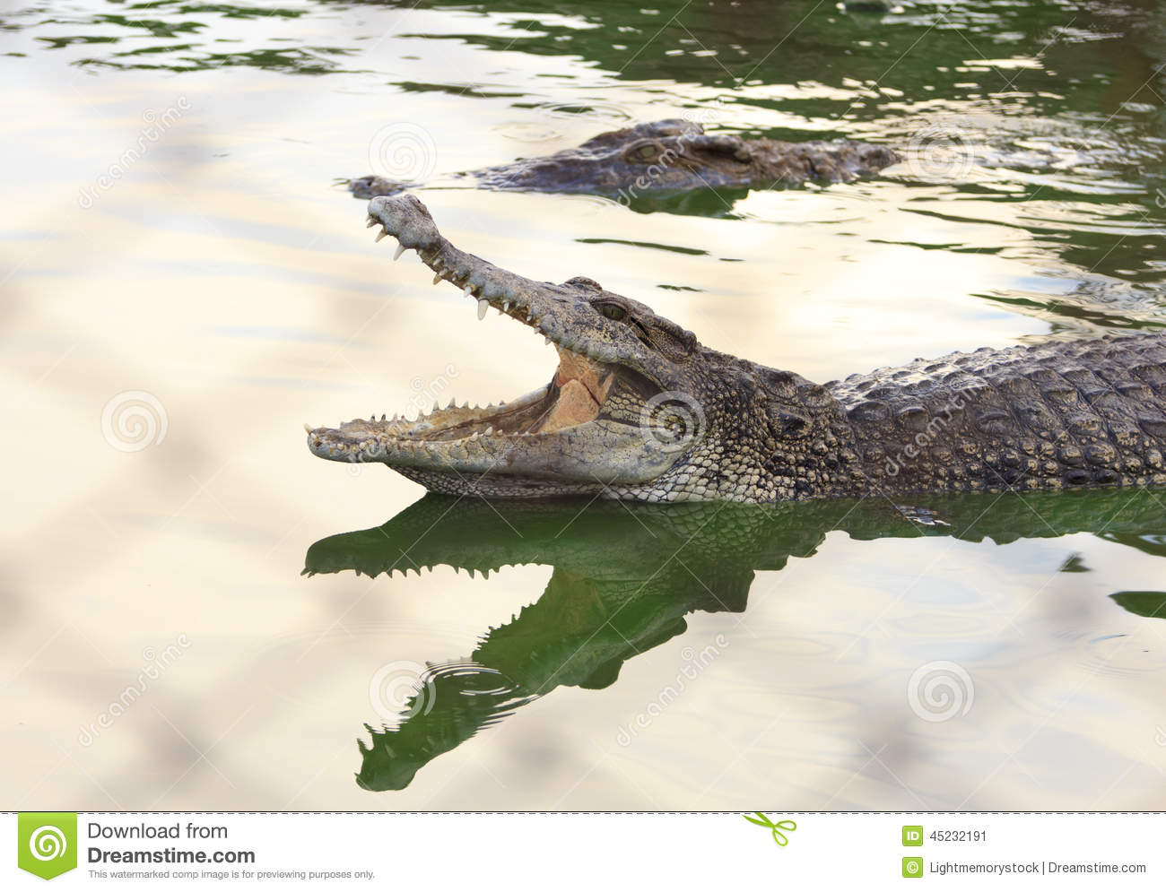 Crocodile Agape. Shot In Samut Prakan Crocodile Farm And Zoo. Stock Photo - I...