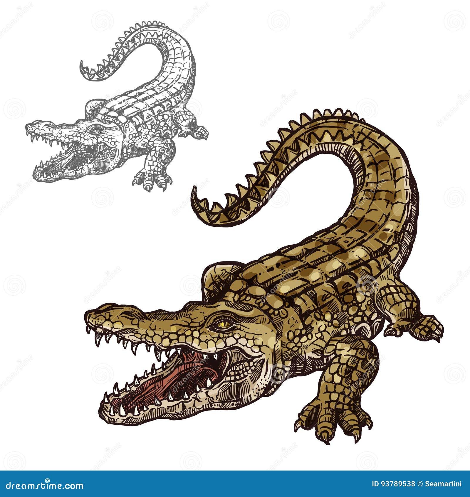 beb47c1b6c5bf Alligator Icon Stock Illustrations – 1
