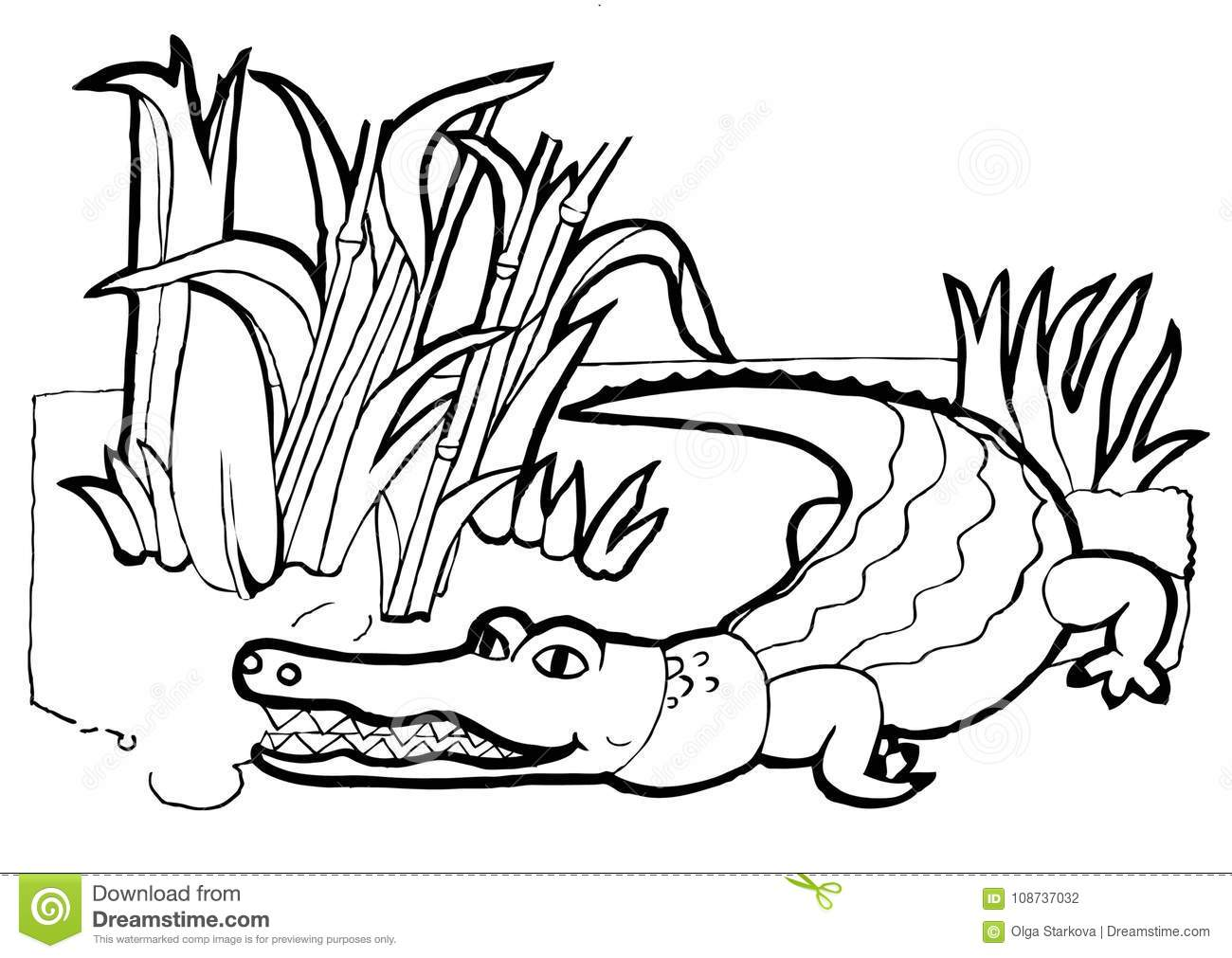 Crocodile, Colouring Book,black And White Version Stock Vector ...