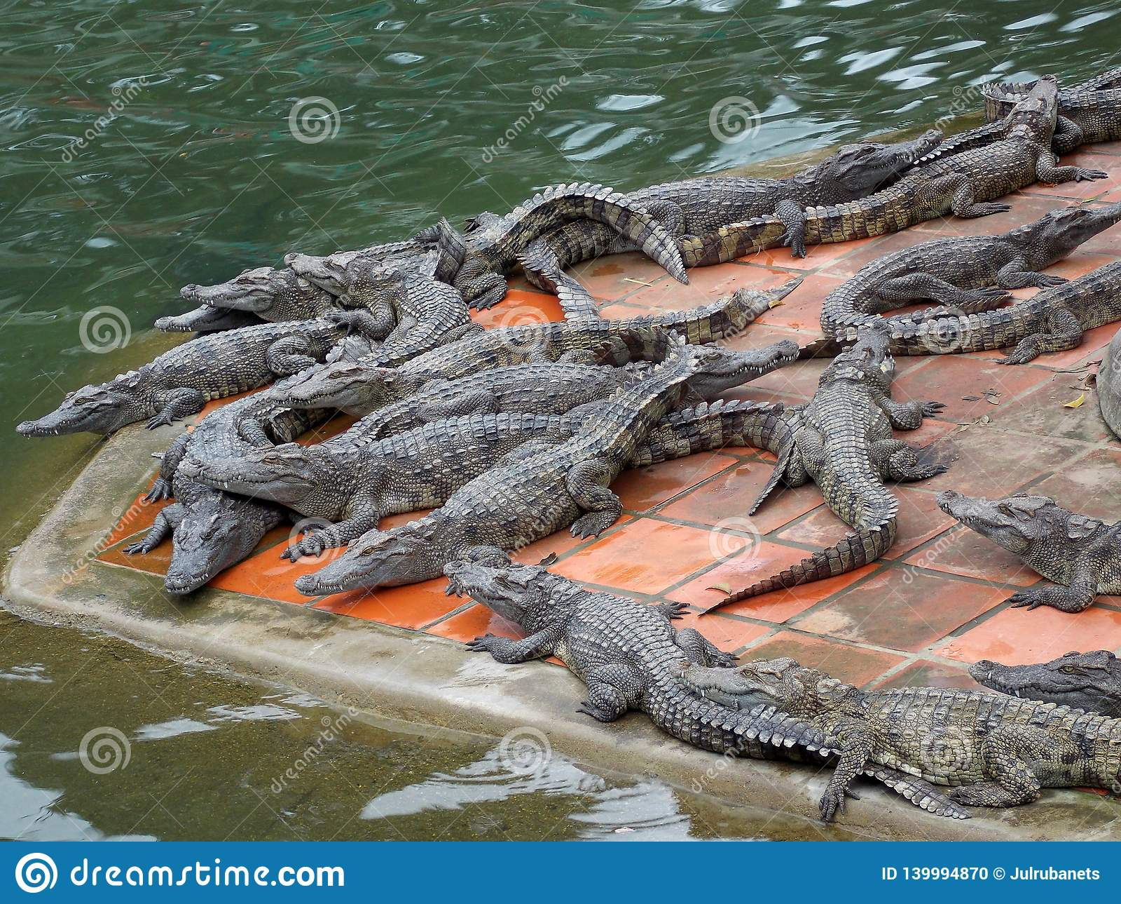 Crocodile farm, Vietnam