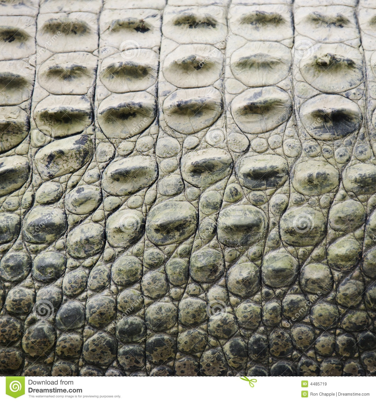 crocodile scales royalty free stock images image 4485719 clip art alligator angry clip art alligators free