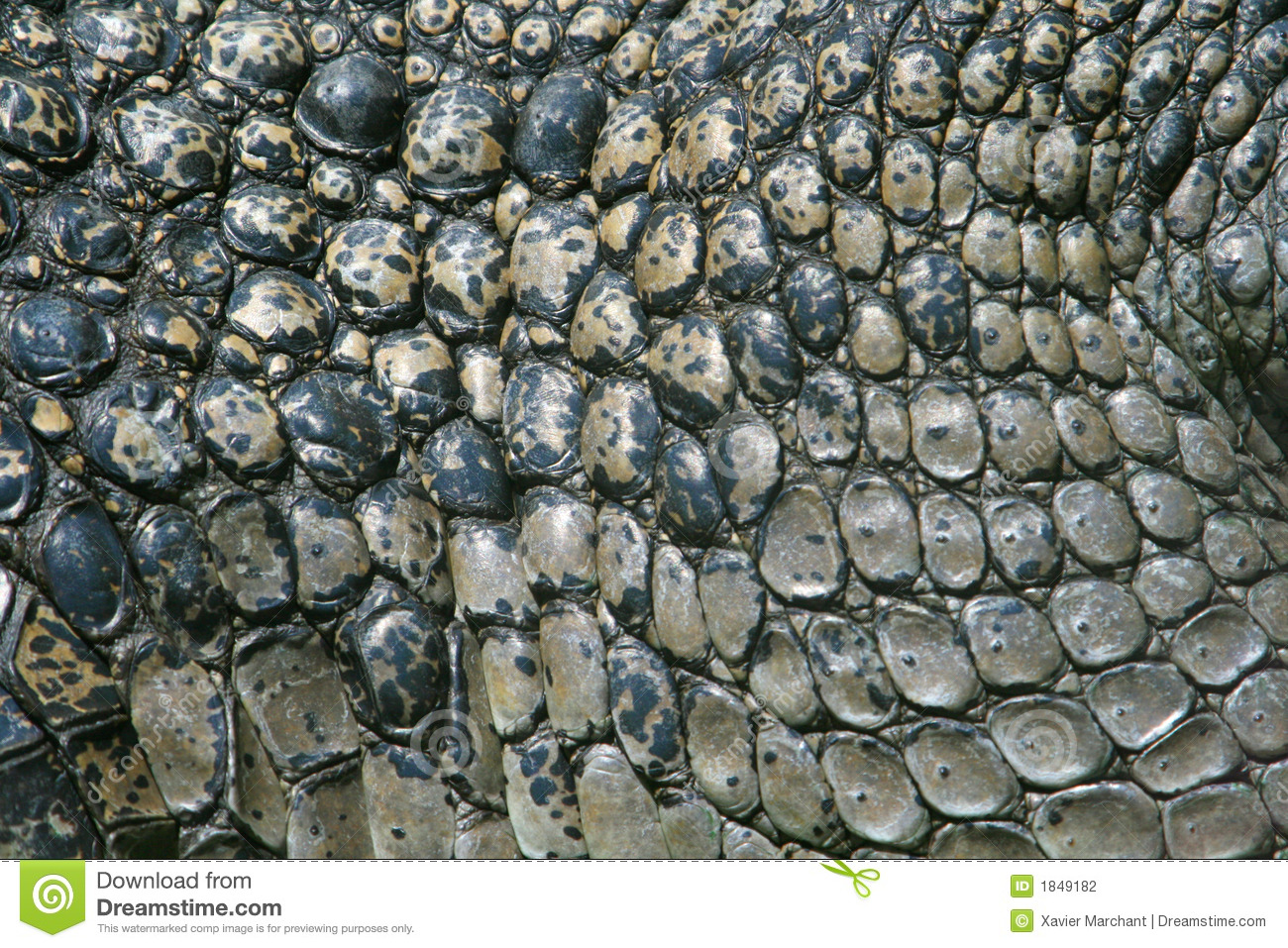 Crocodile Skin Stock Photography - Image: 1849182