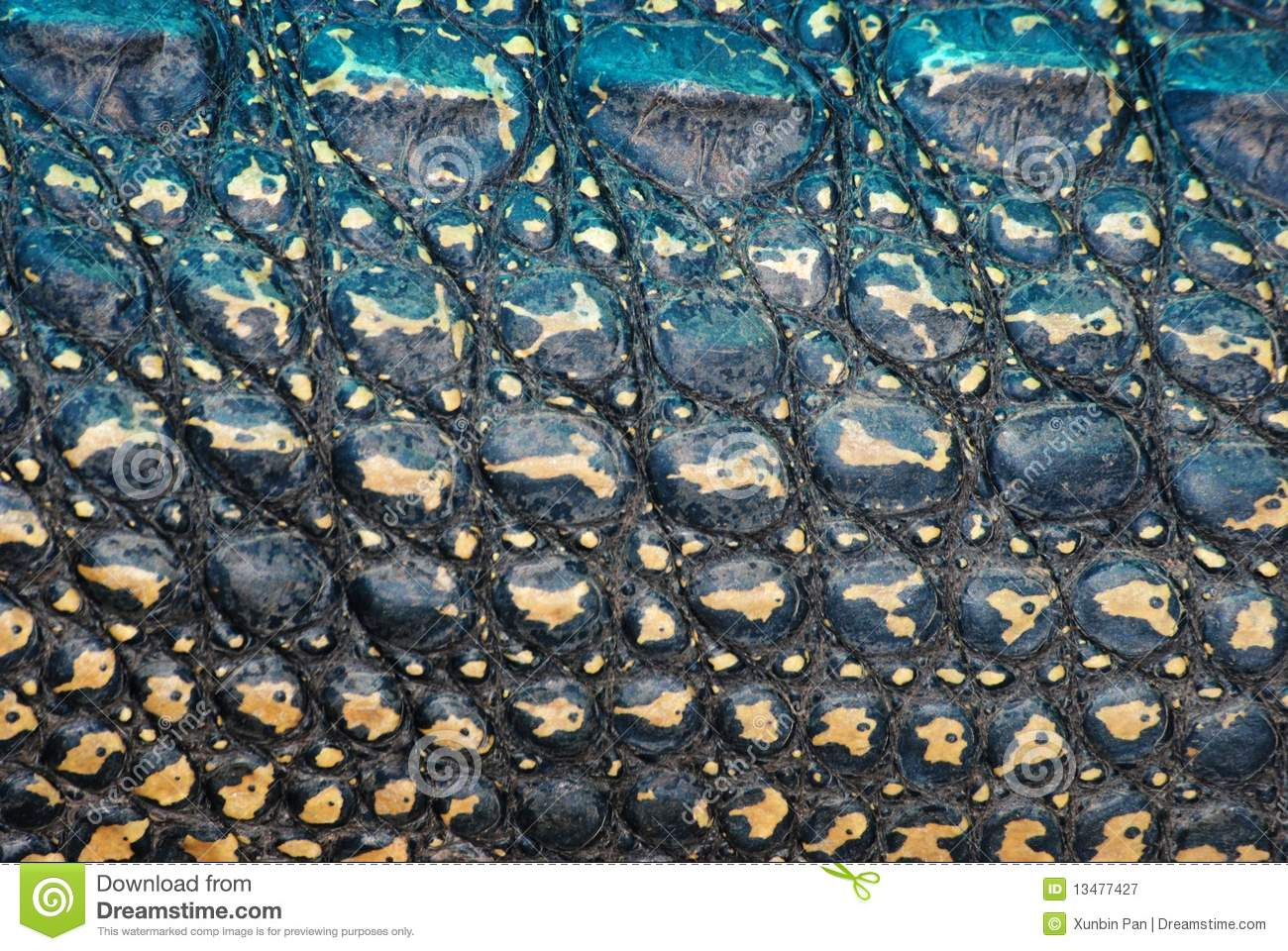 Crocodile Skin Texture Royalty Free Stock Photography Image 13477427