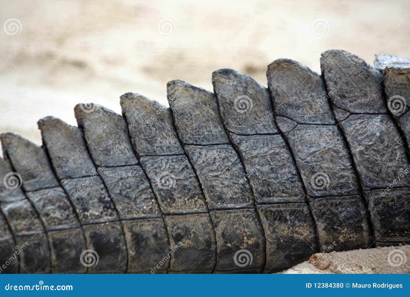 Crocodile tail - photo#24