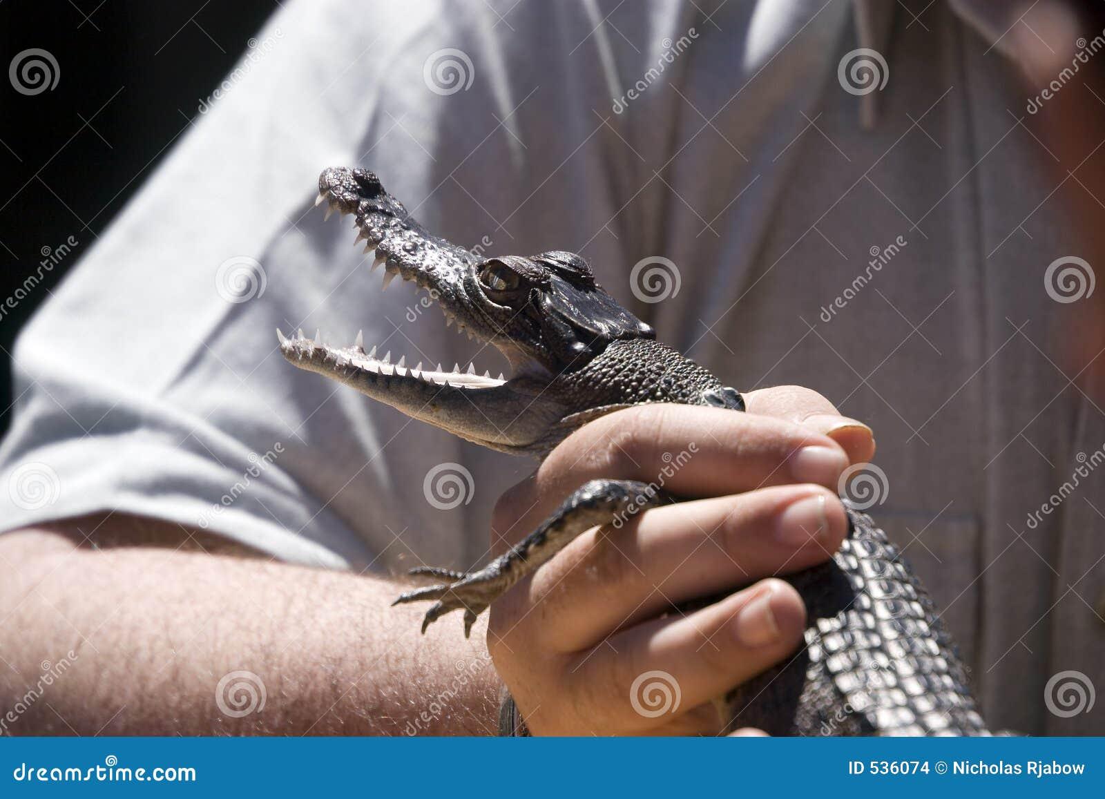 Crocodilo do bebê