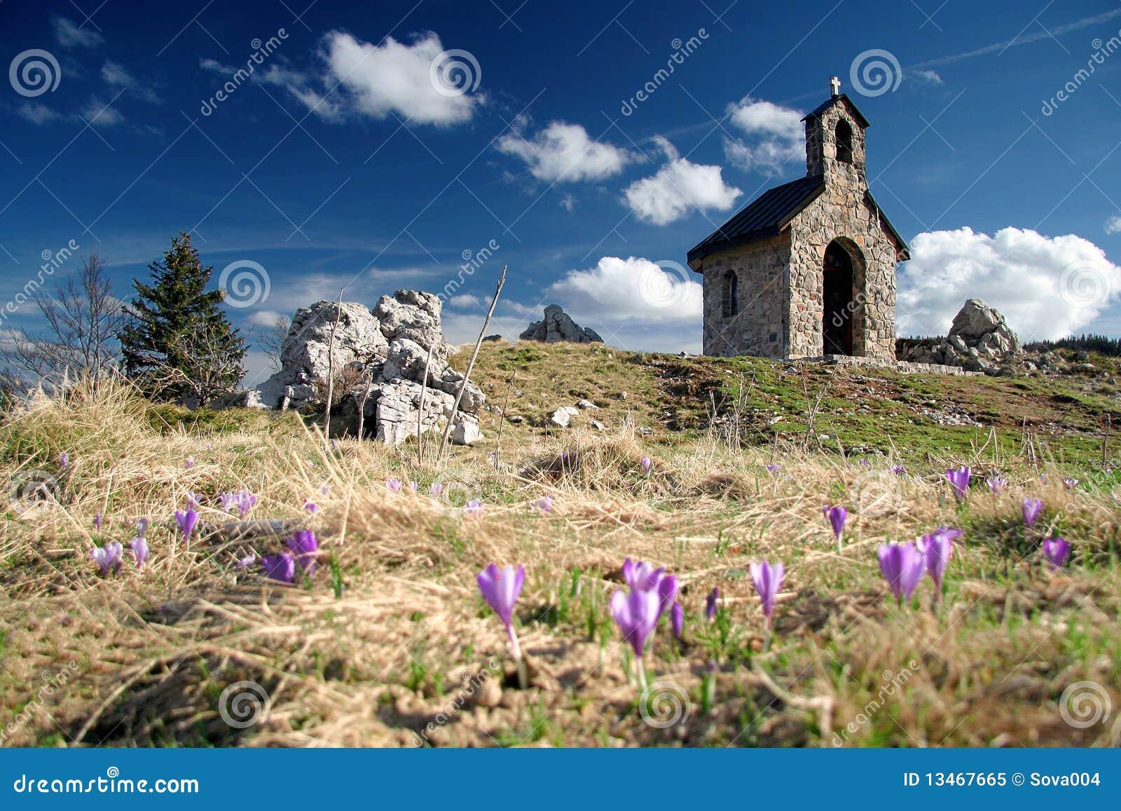 Crocus bloom at spring