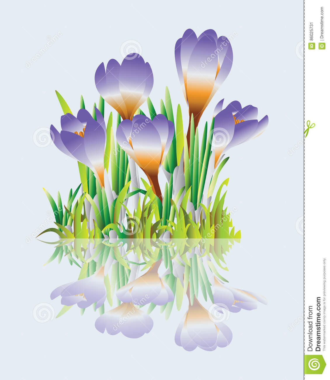 Crocuses Grass And Spring Flowers Vector Image Element For Design Holiday Greeting Cards With Womens Day Engagement Wedding Or Birthday