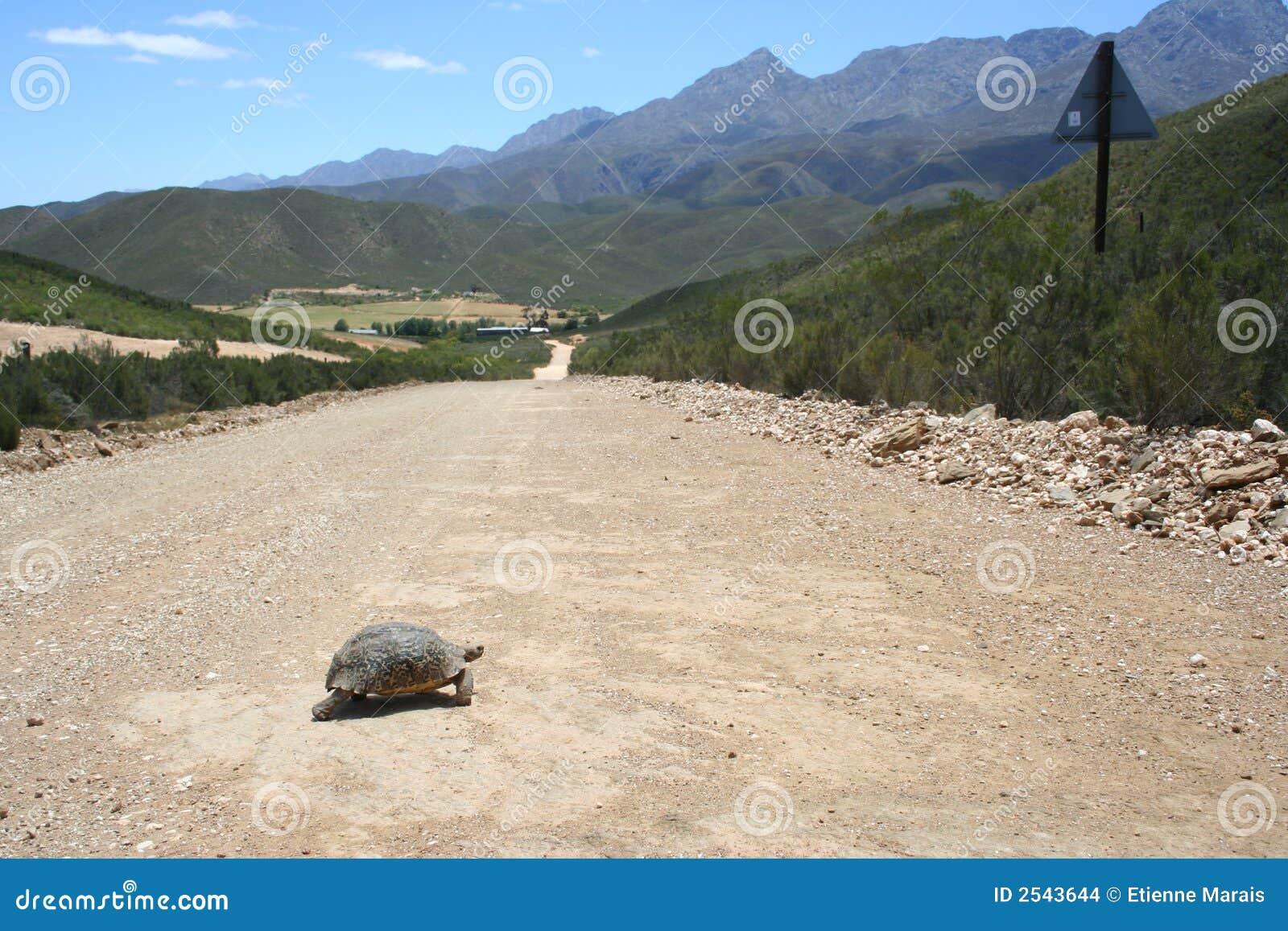 Croisement de tortue