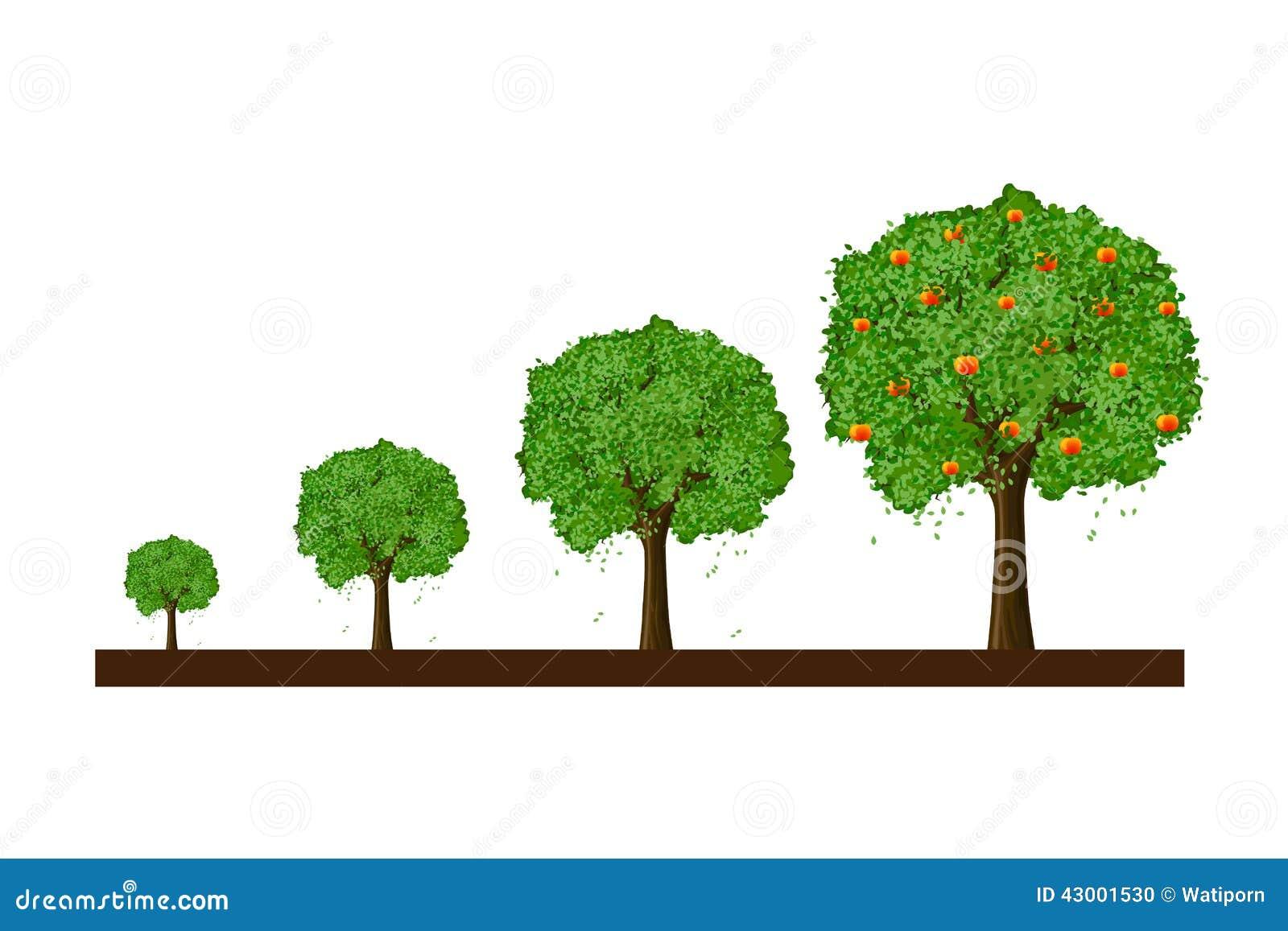 croissance d 39 arbre illustration stock illustration du dessin 43001530. Black Bedroom Furniture Sets. Home Design Ideas