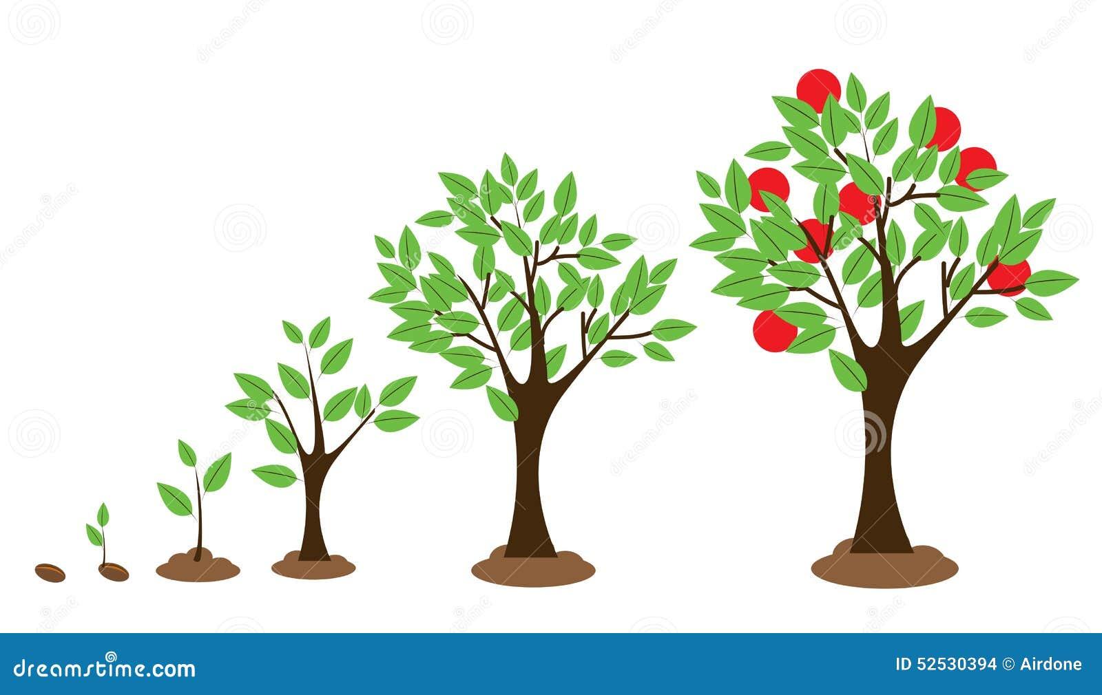 Croissance d 39 arbre illustration de vecteur image 52530394 for Arbre d ombrage croissance rapide