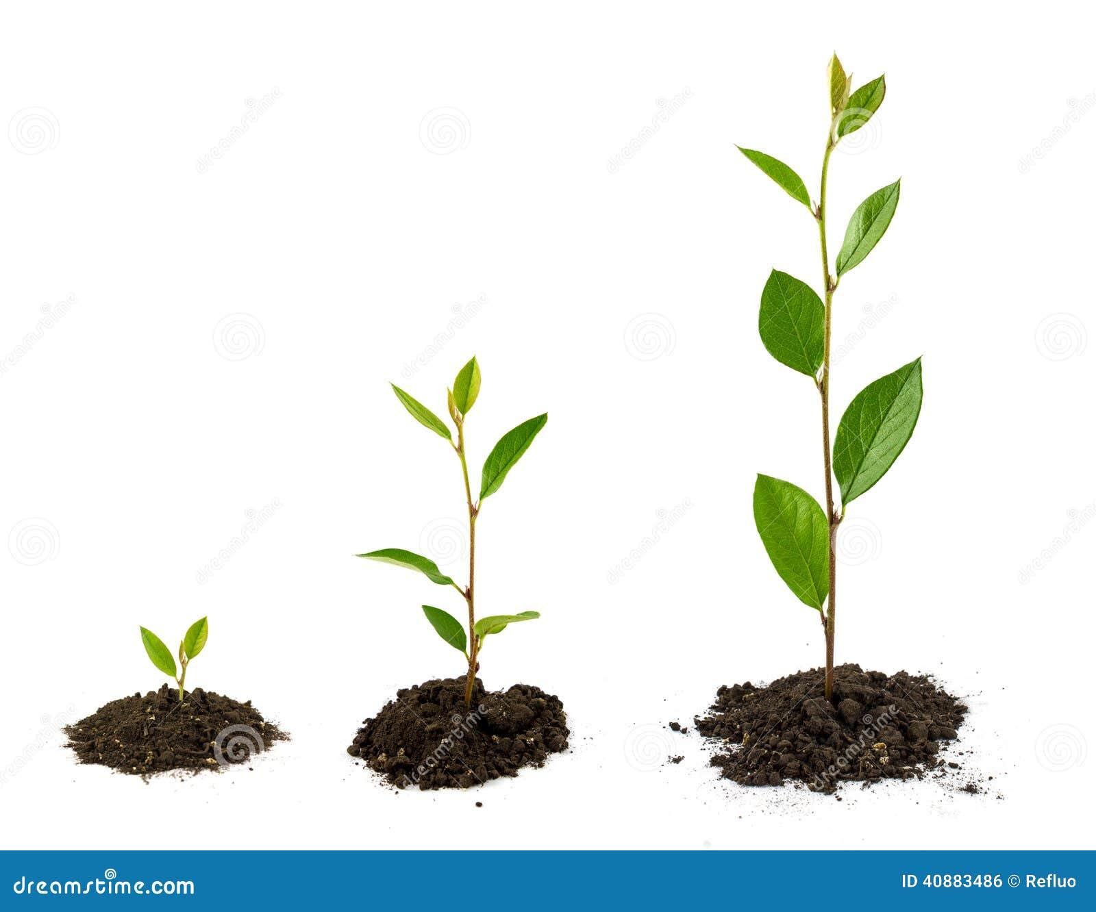 Croissance de plantes photo stock image 40883486 for Plante qui pousse