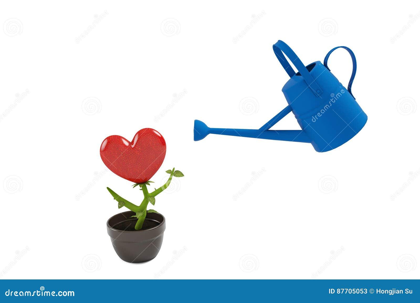 Croissance de plantes d amour