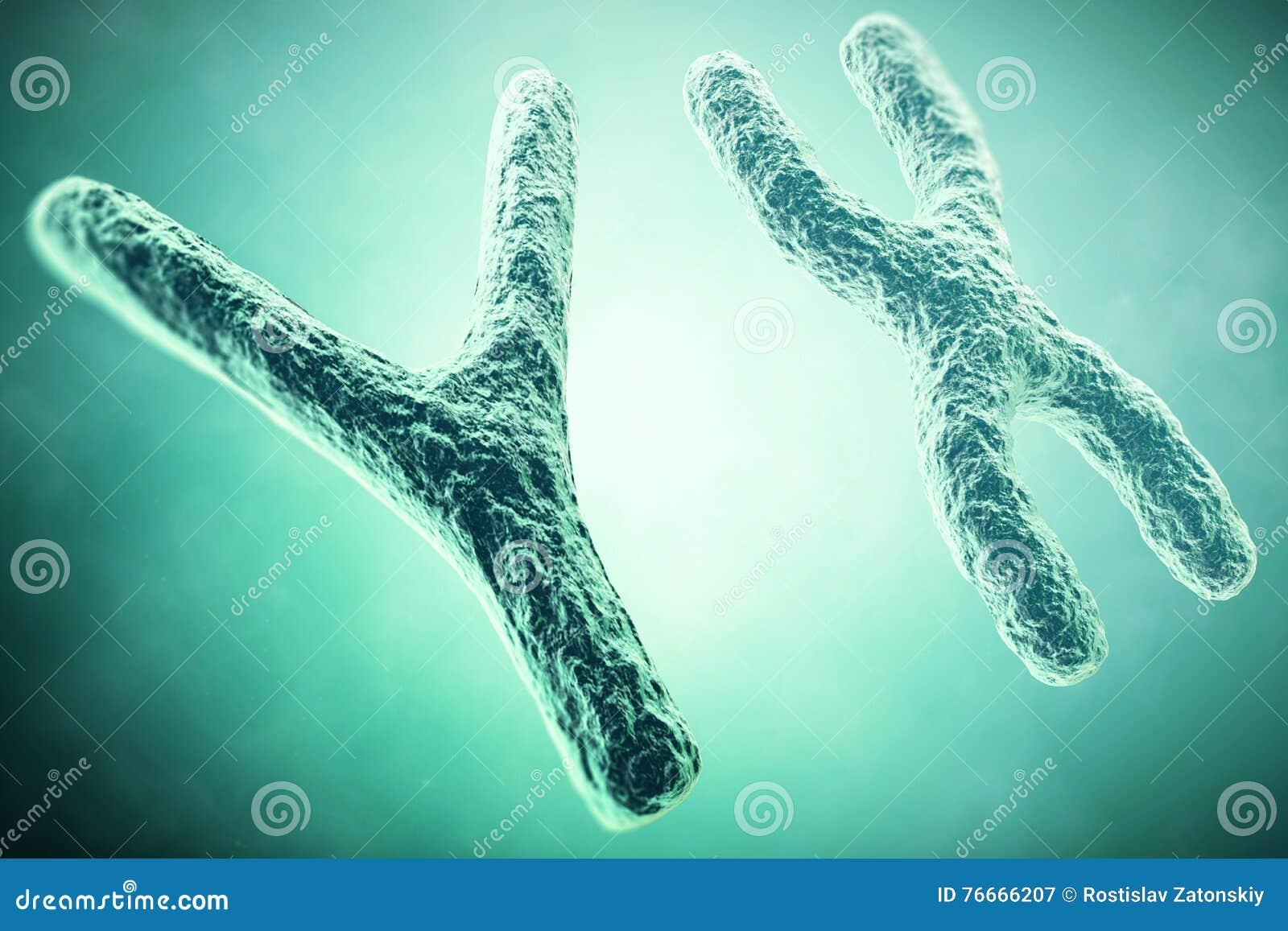 Cromosoma de YX en el primero plano, un concepto científico ilustración 3D