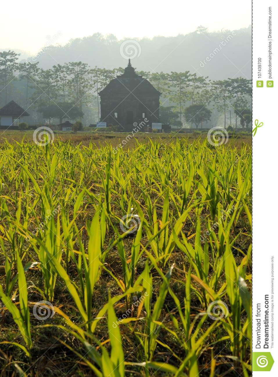 Crop, Agriculture, Field, Vegetation Picture. Image: 107439700