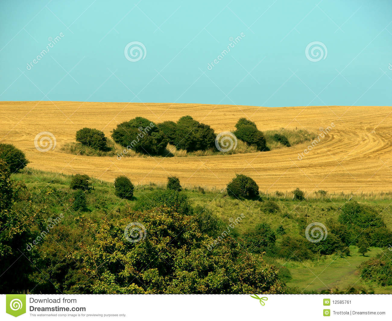 Landscaping Around A Group Of Trees : Circles around a group of green trees in the summer landscape kent