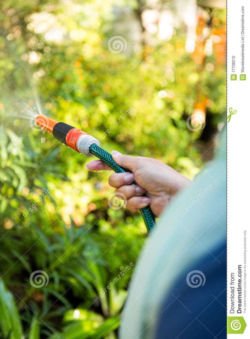 Cropped image of gardener watering from hose at garden