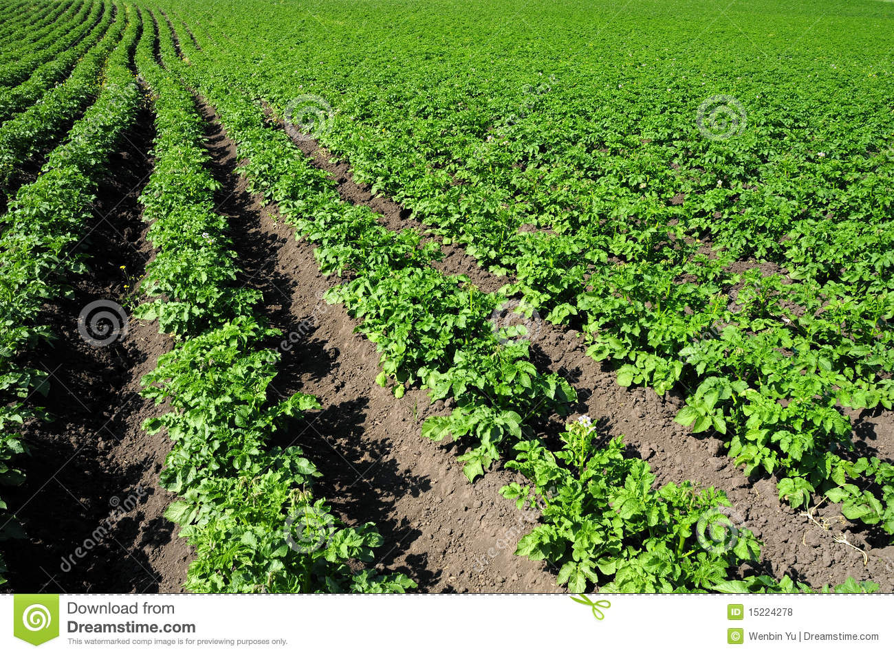 Crops and in the furrow