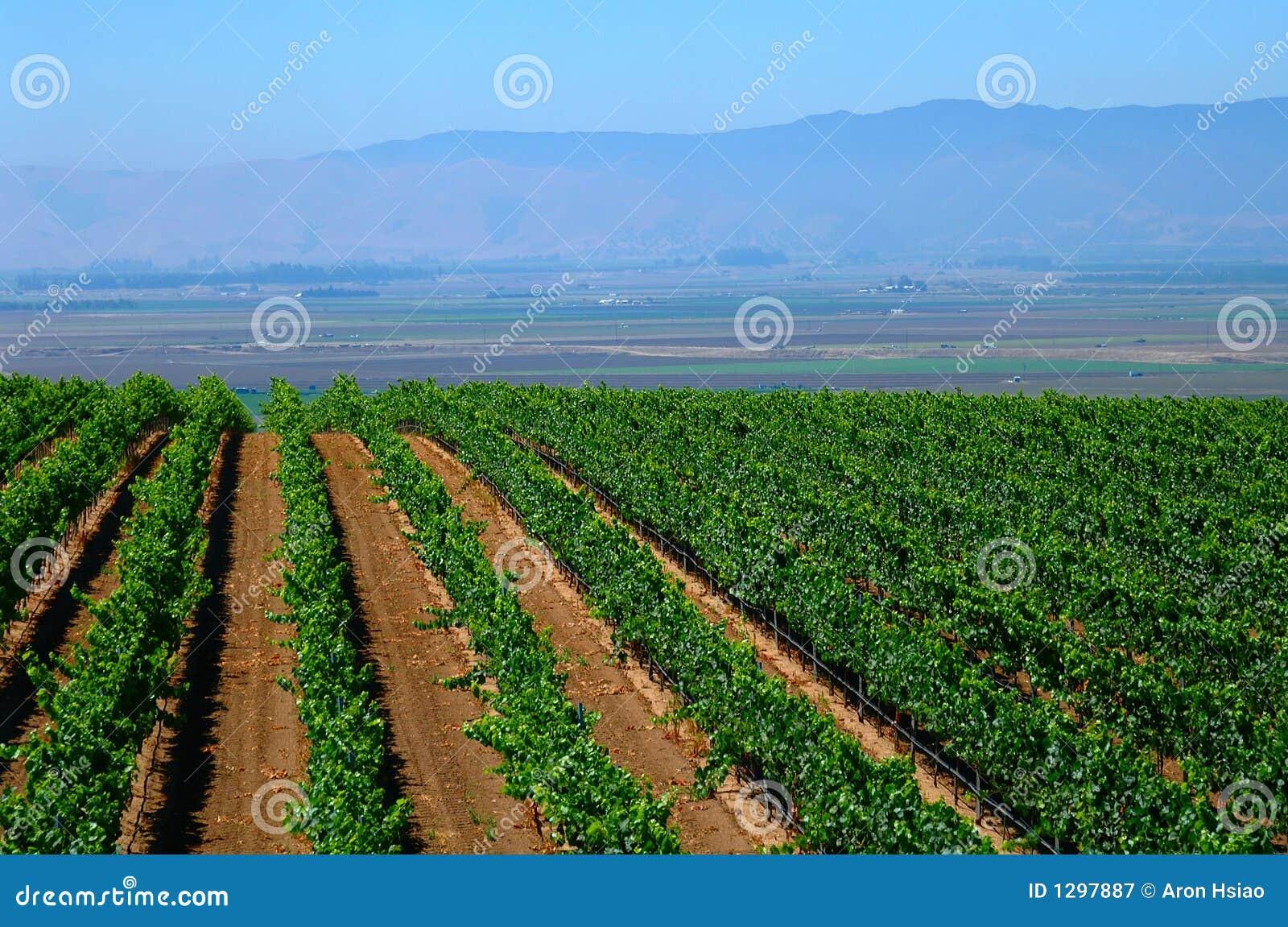 vineyard vines california