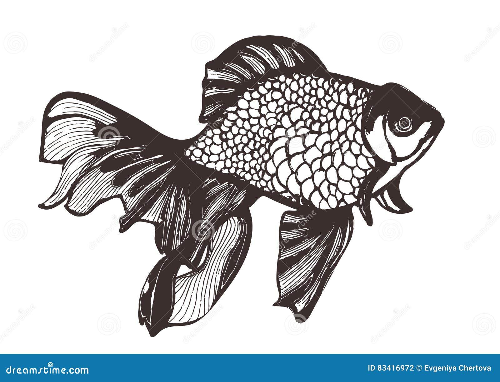 Croquis abstrait de poissons dessin de main illustration - Croquis poisson ...