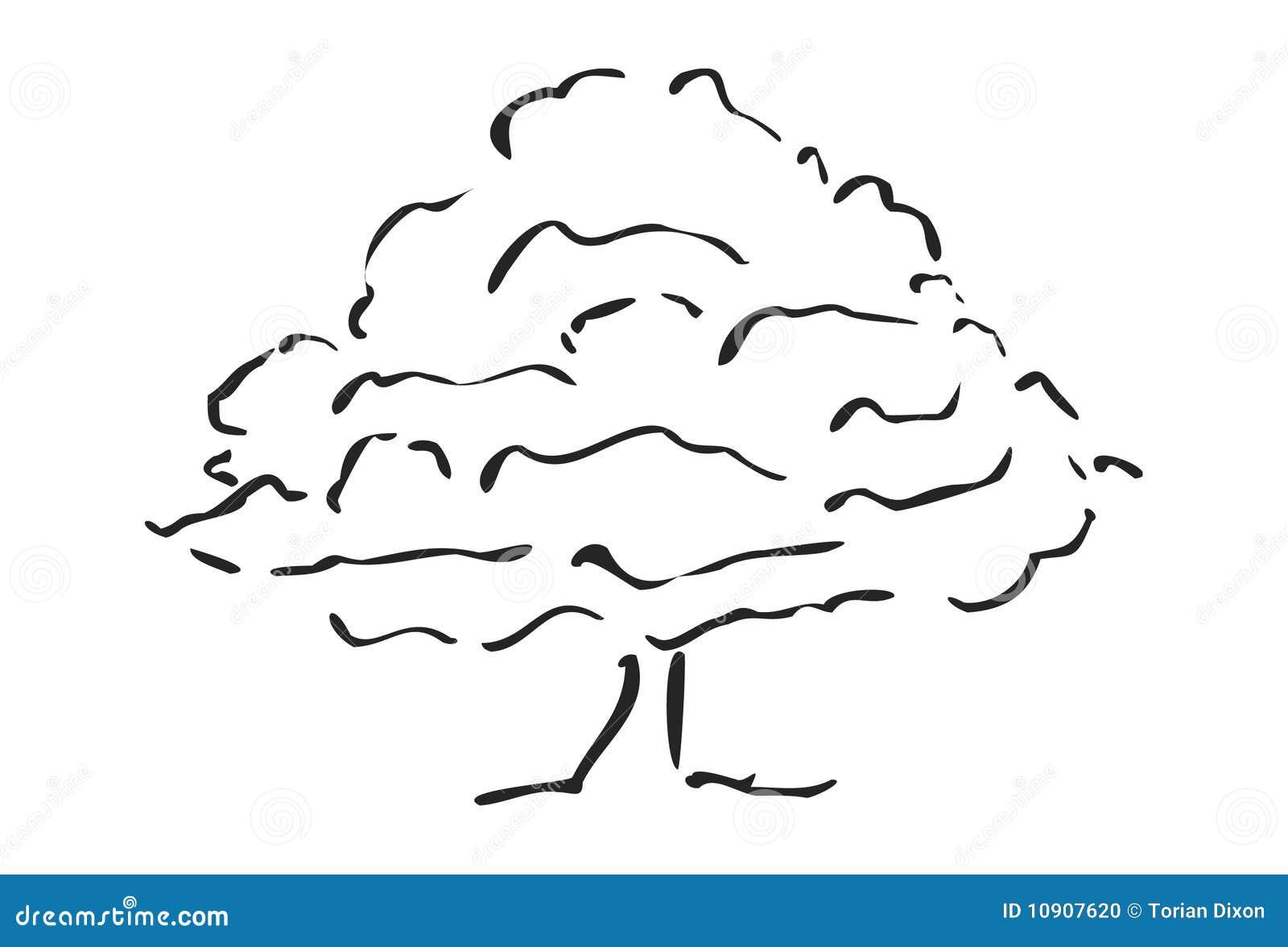 Croquis d 39 arbre photo stock image 10907620 - Croquis arbre ...