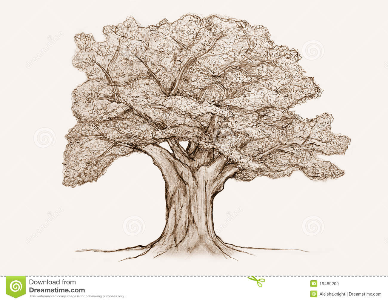Croquis d 39 arbre illustration stock illustration du crayon - Croquis arbre ...