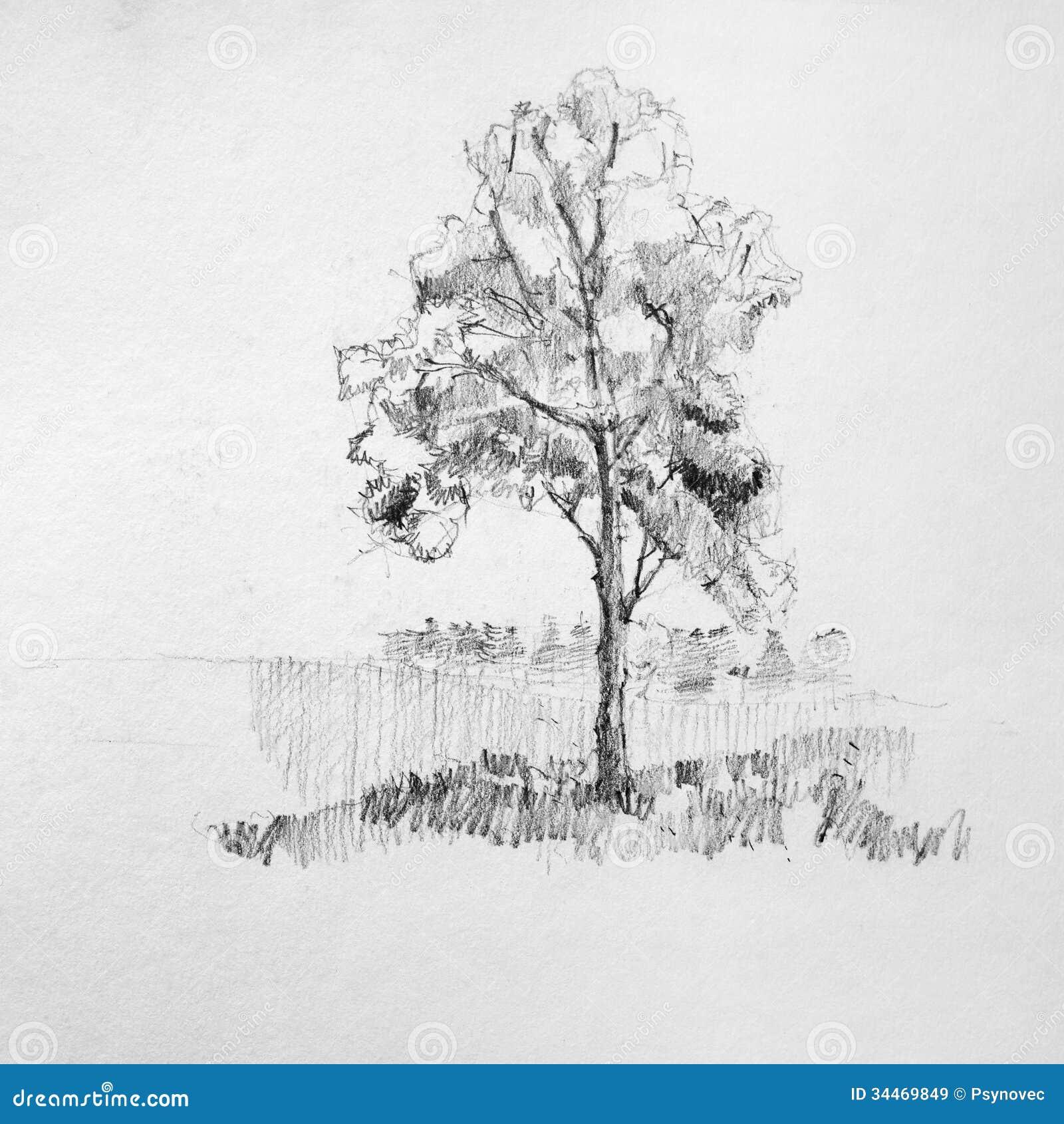 Croquis d 39 arbre illustration stock illustration du detail - Croquis arbre ...