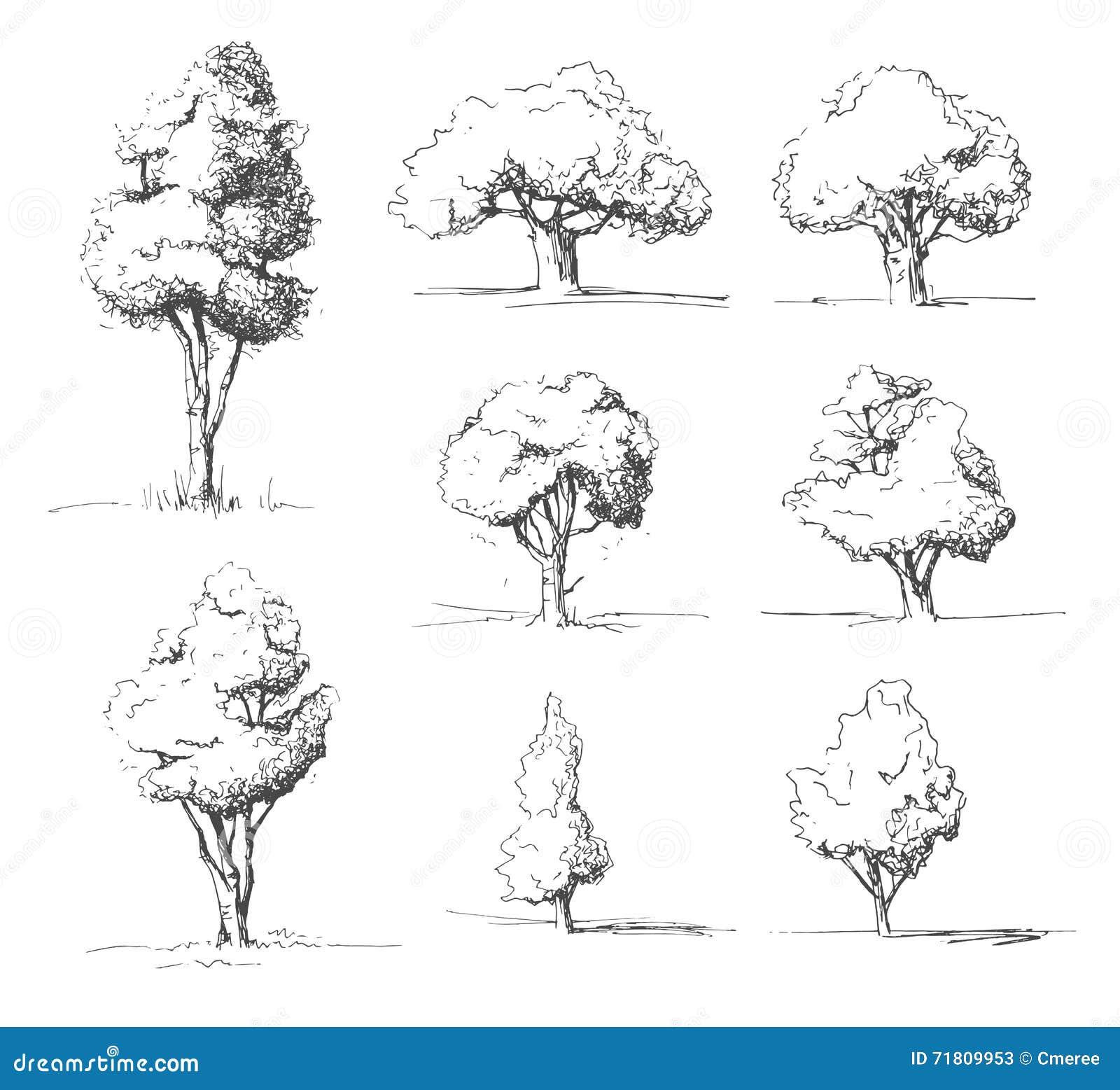 Croquis d 39 arbre r gl s illustration de vecteur image - Croquis arbre ...