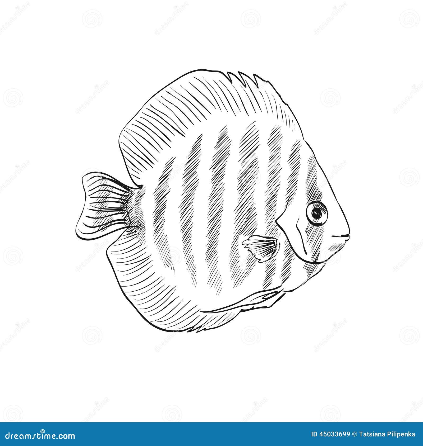 Croquis d 39 un poisson illustration de vecteur image 45033699 - Croquis poisson ...